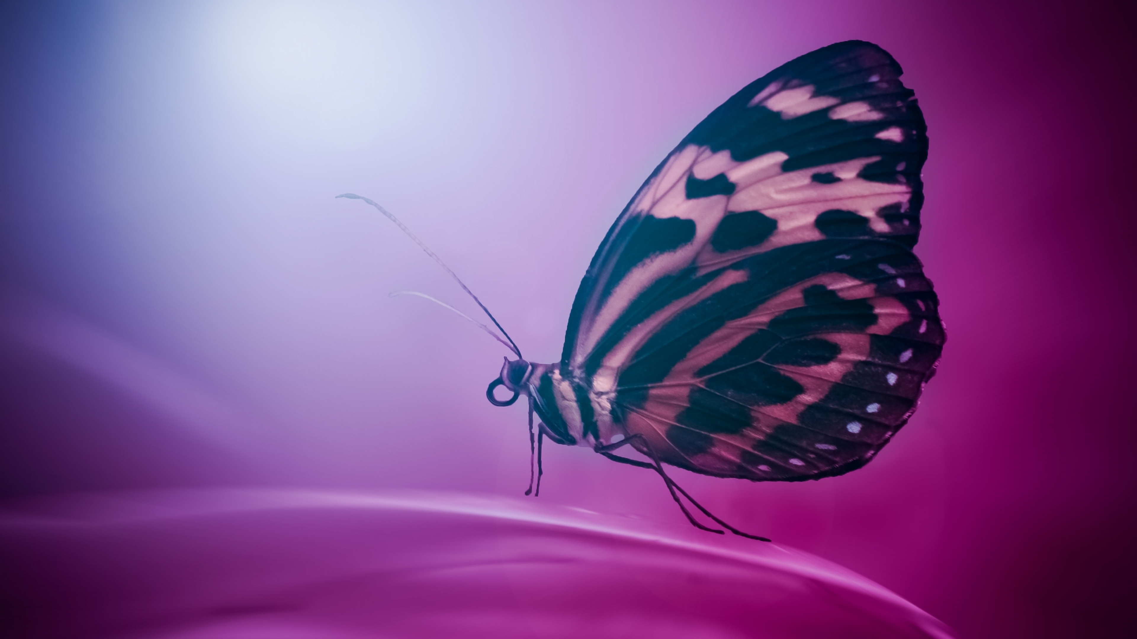 butterfly wings macro | photography hd 4k wallpapers