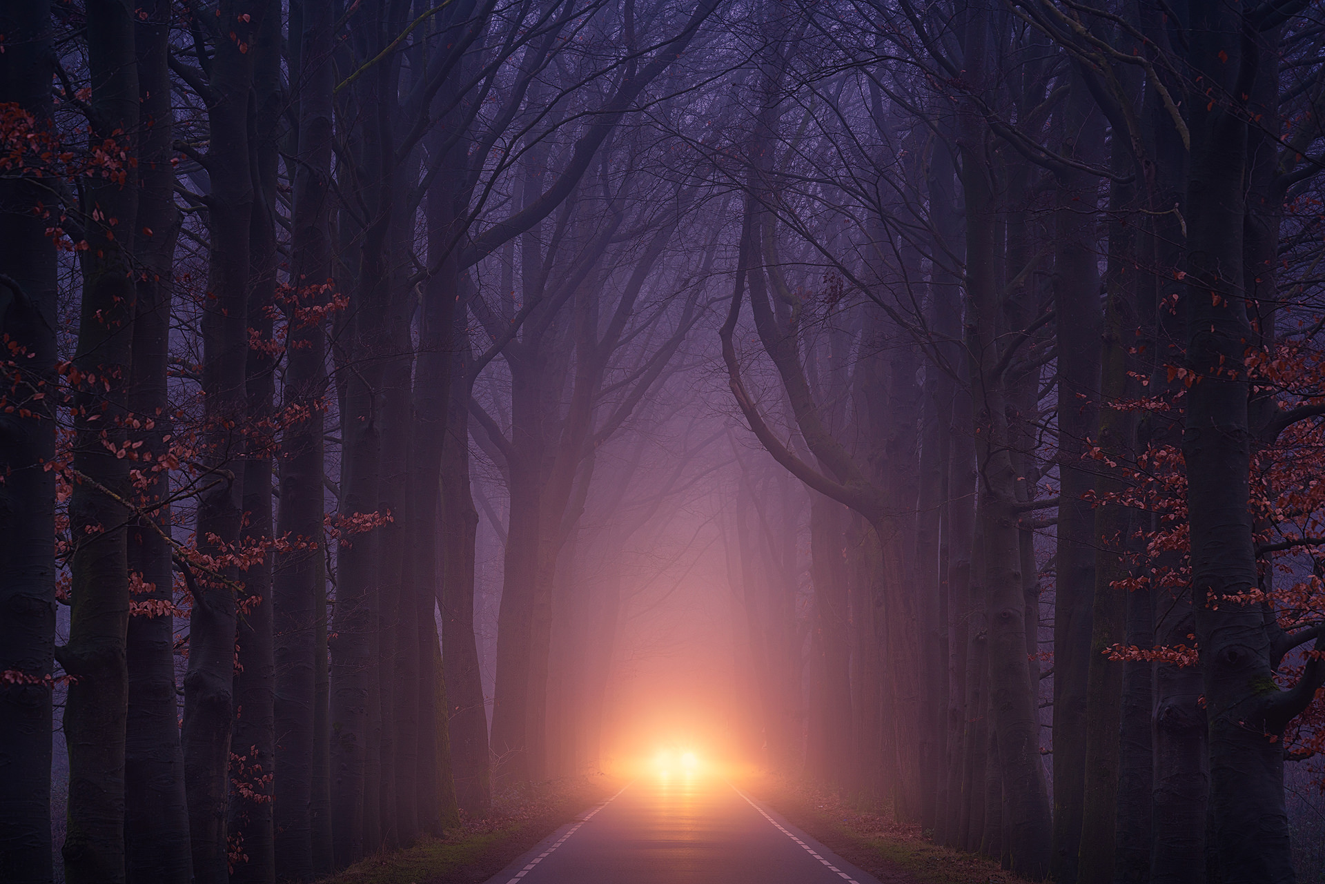 Car Light Road Autumn Trees Foggy Weather