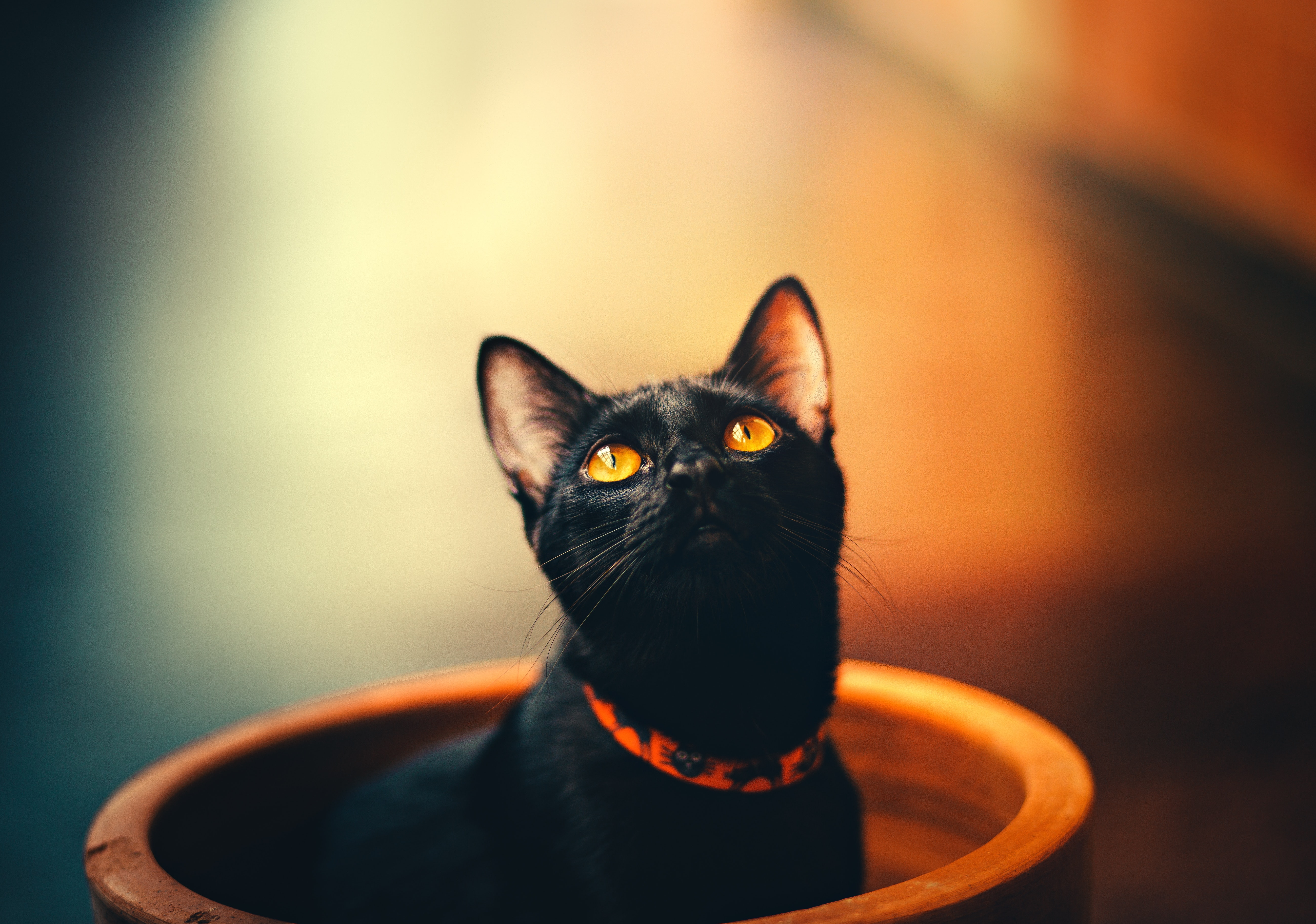 Cat 5k, HD Animals, 4k Wallpapers, Images, Backgrounds ...