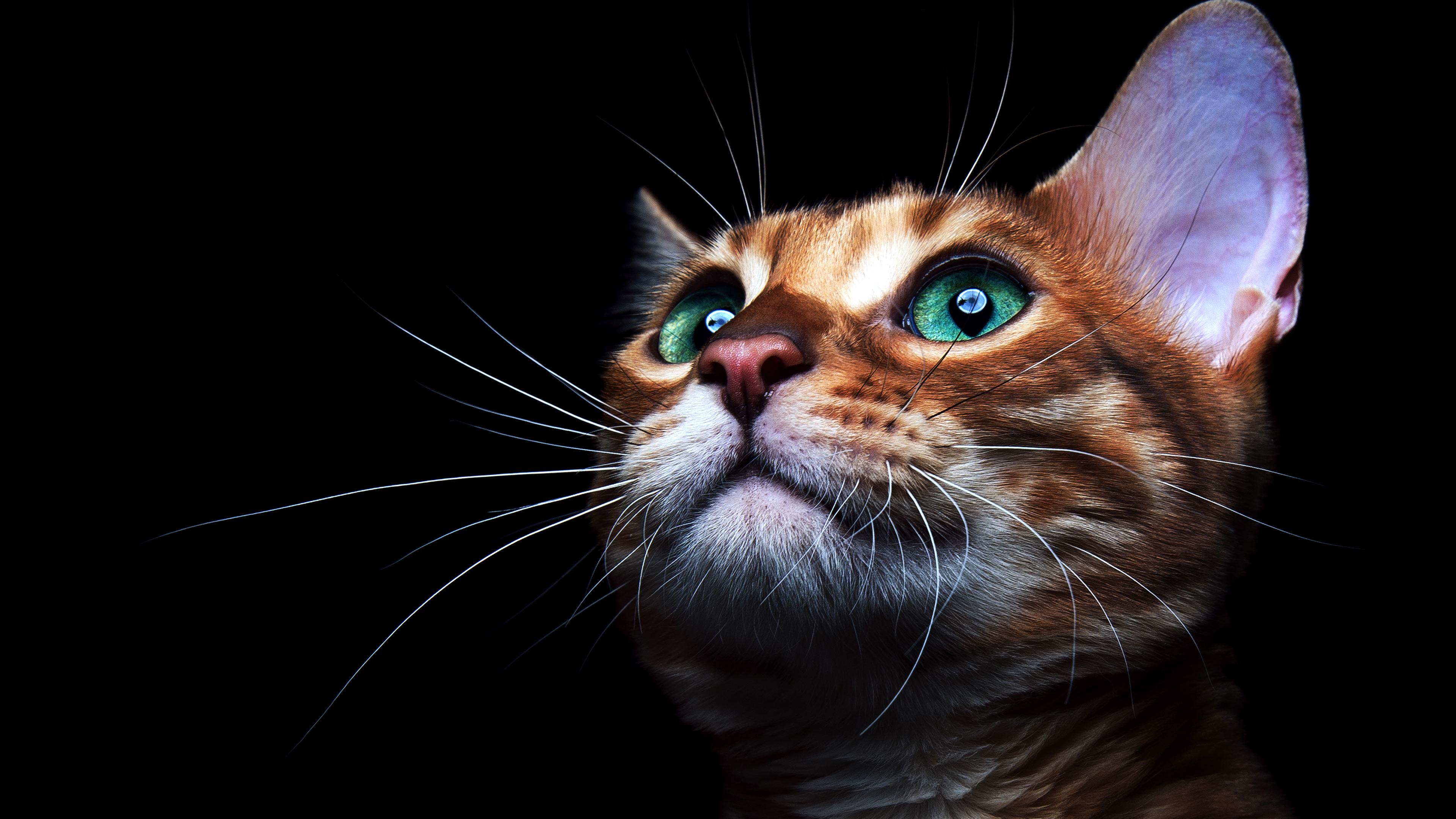 cat deep sea green eyes hd animals 4k wallpapers images