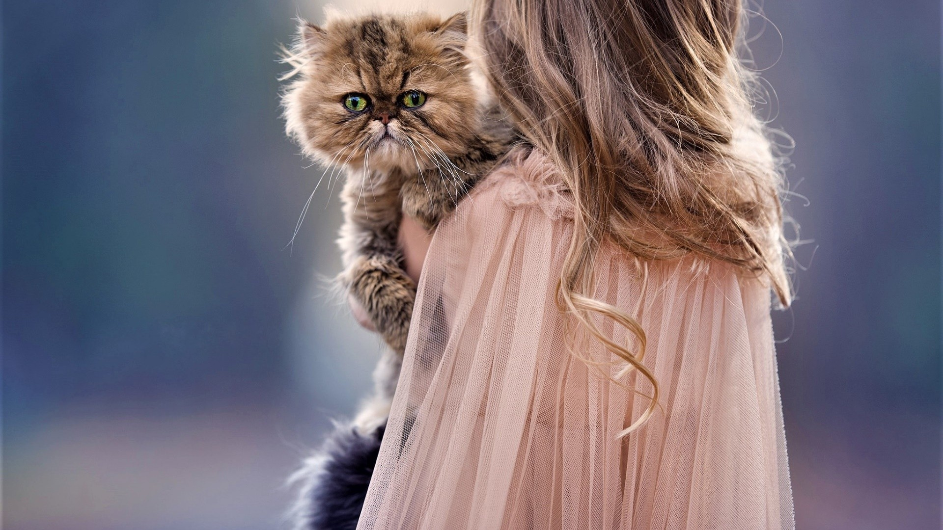 children and cat cute, hd cute, 4k wallpapers, images, backgrounds