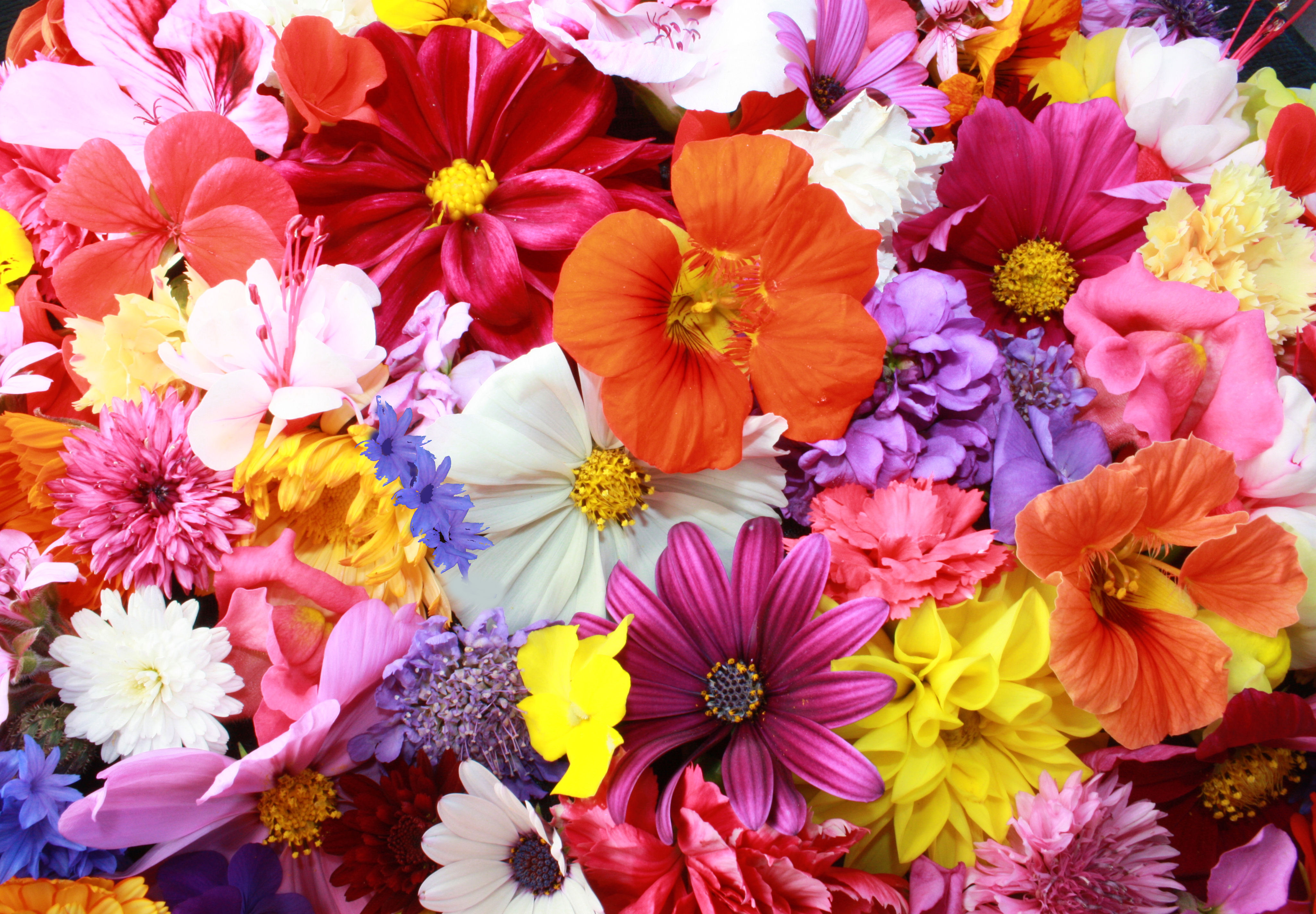 Free Colorful Flower Wallpaper Downloads: 2048x1152 Colorful HD Flowers 2048x1152 Resolution HD 4k