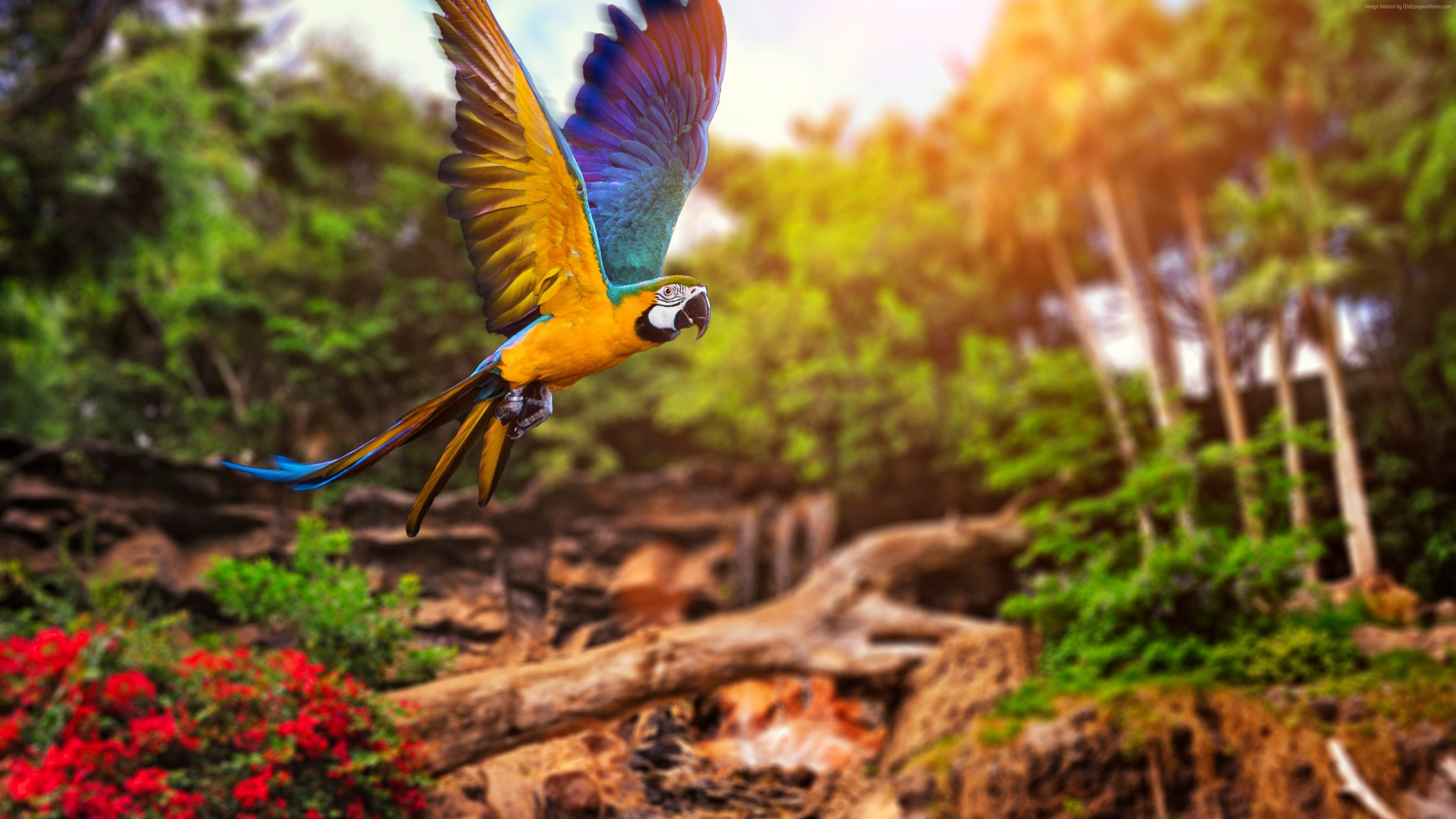 Colorful Parrot 4k HD Birds Wallpapers Images Backgrounds