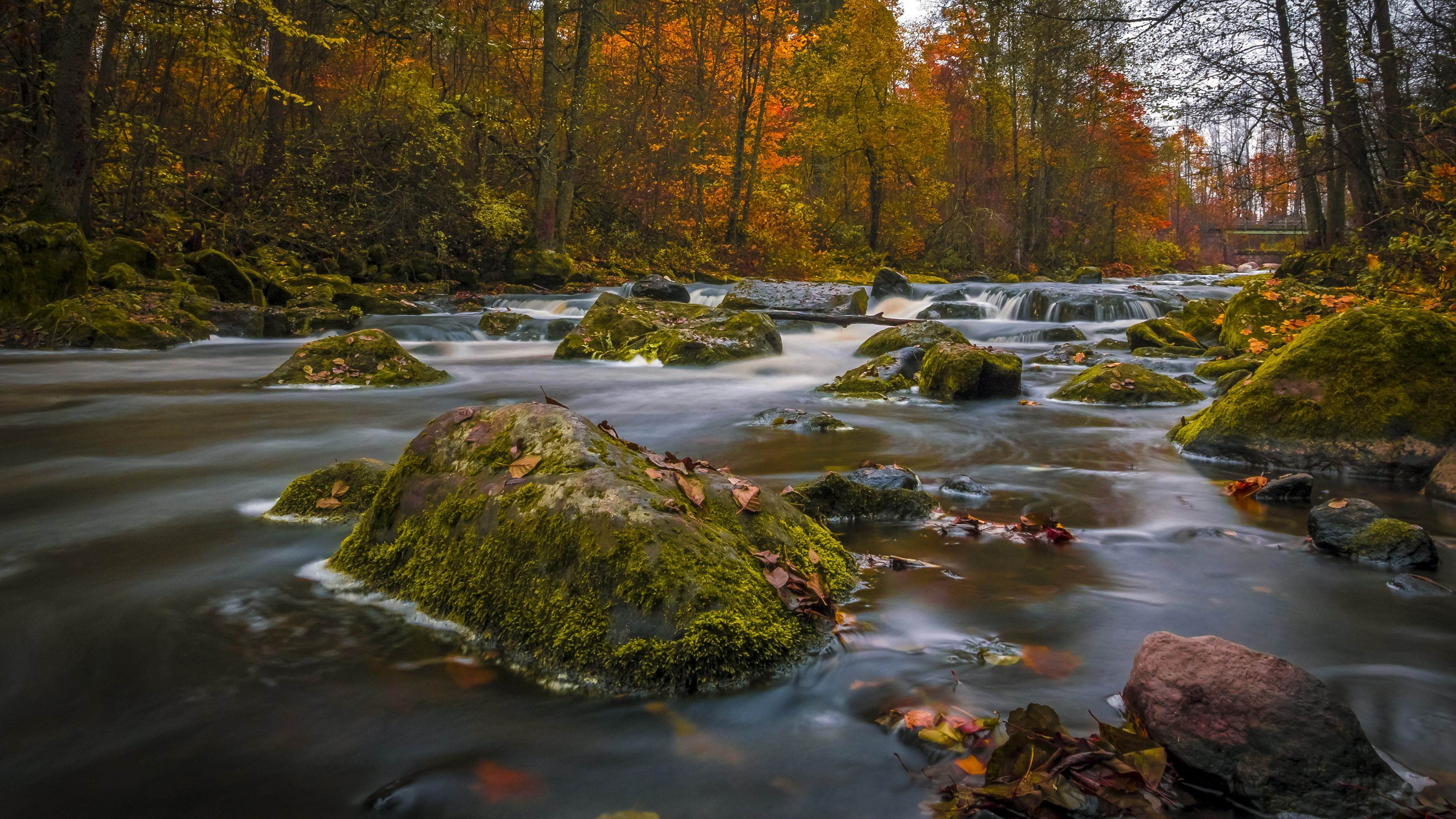 Colors Of Autumn, HD Nature, 4k Wallpapers, Images ...