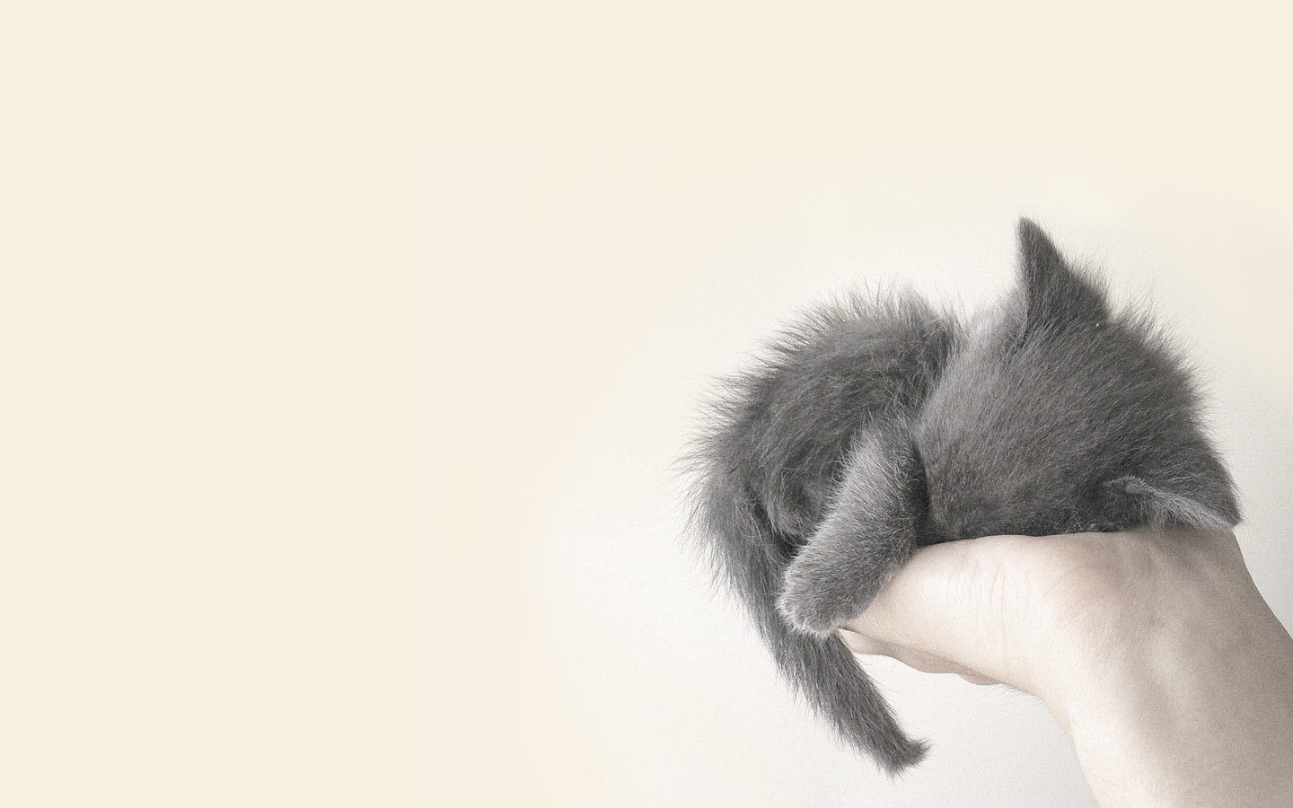 Cute Cat Hd Animals 4k Wallpapers Images Backgrounds Photos And