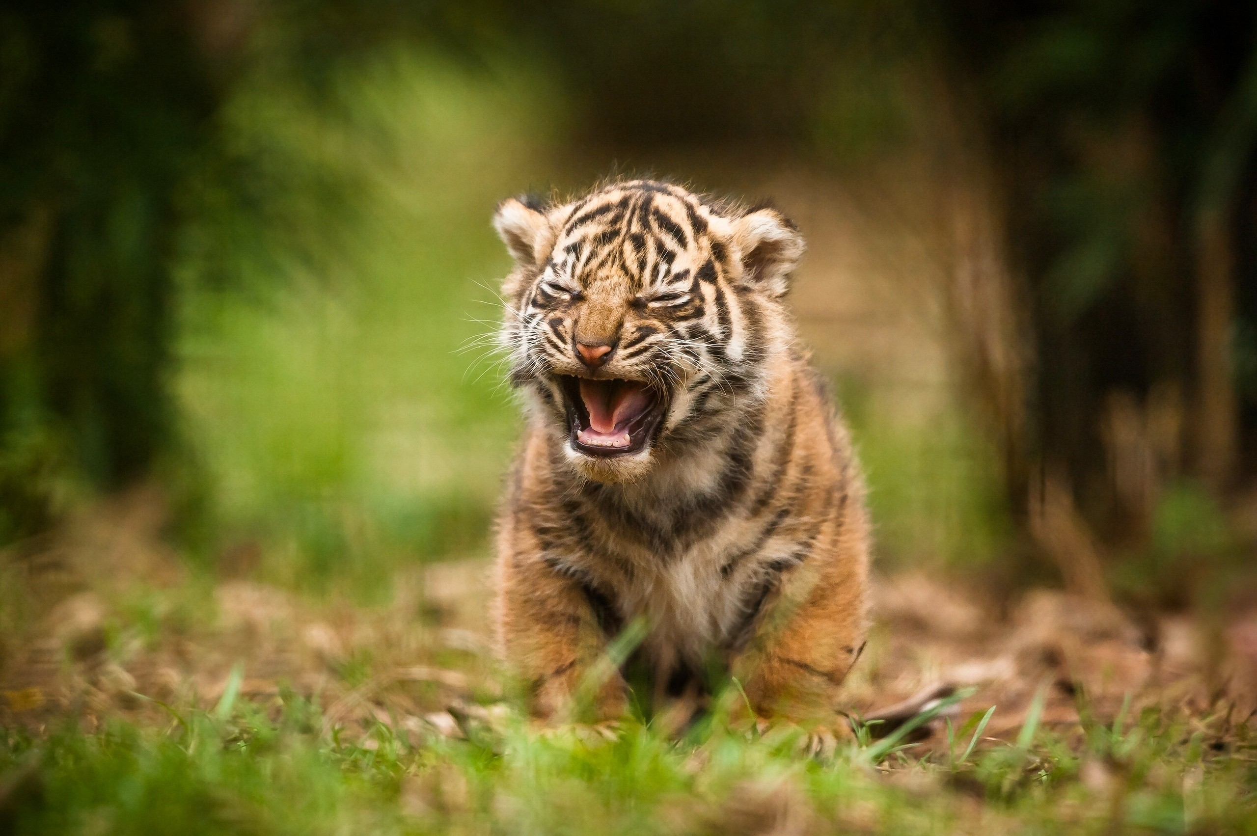 Cute Cub Hd Animals 4k Wallpapers Images Backgrounds Photos And