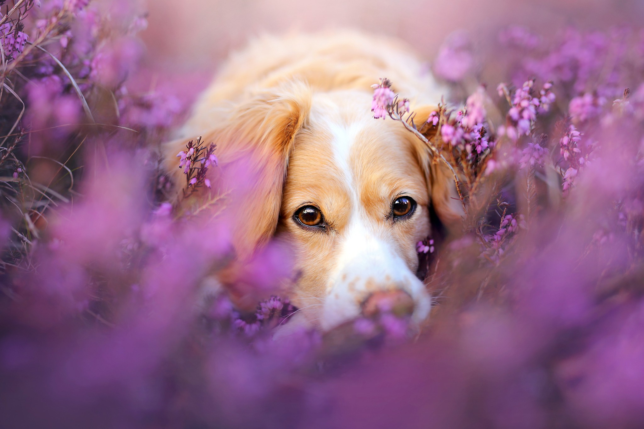cute dog in flowers | animals hd 4k wallpapers
