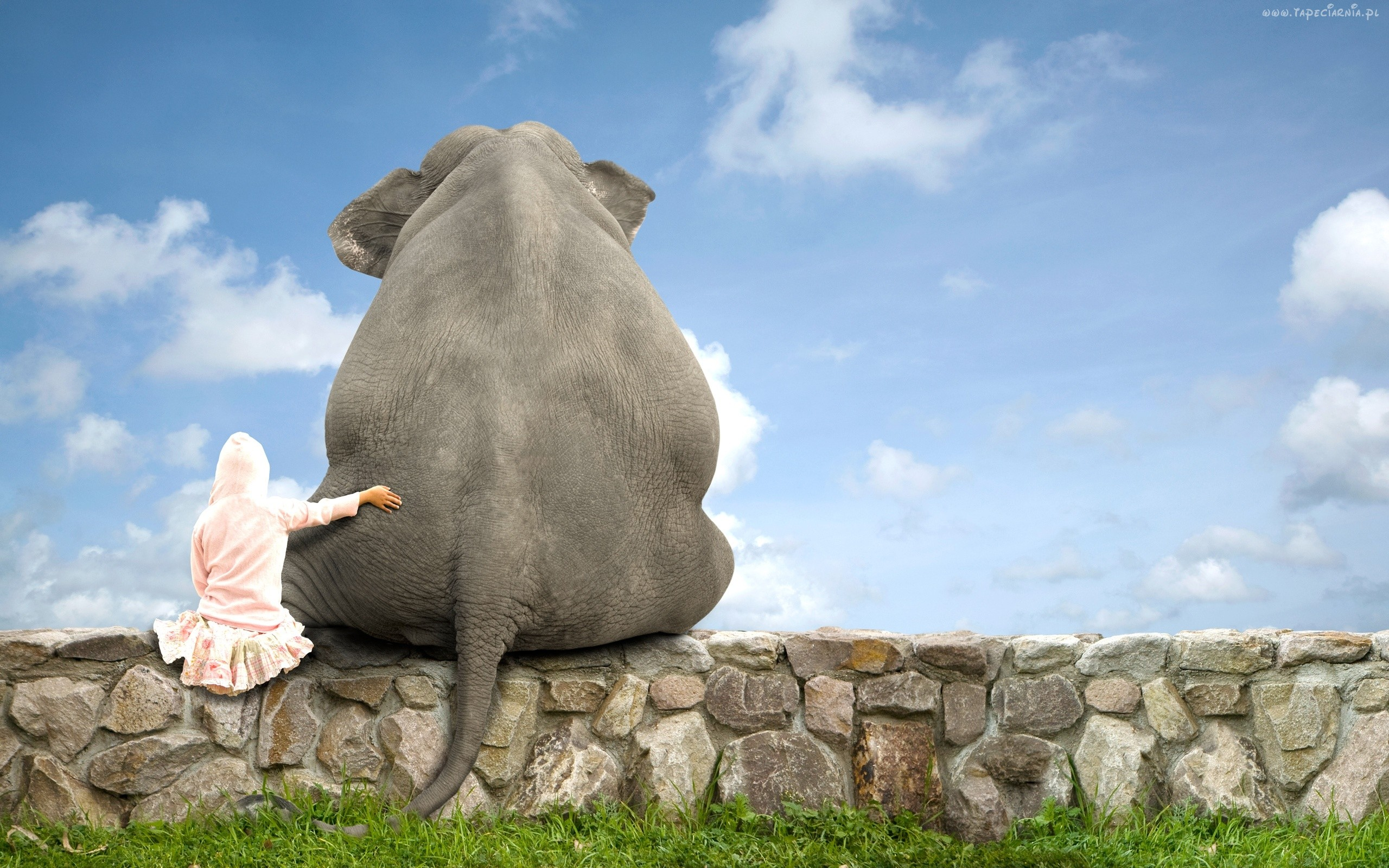 Cute Elephant Friend, HD Animals, 4k Wallpapers, Images ...
