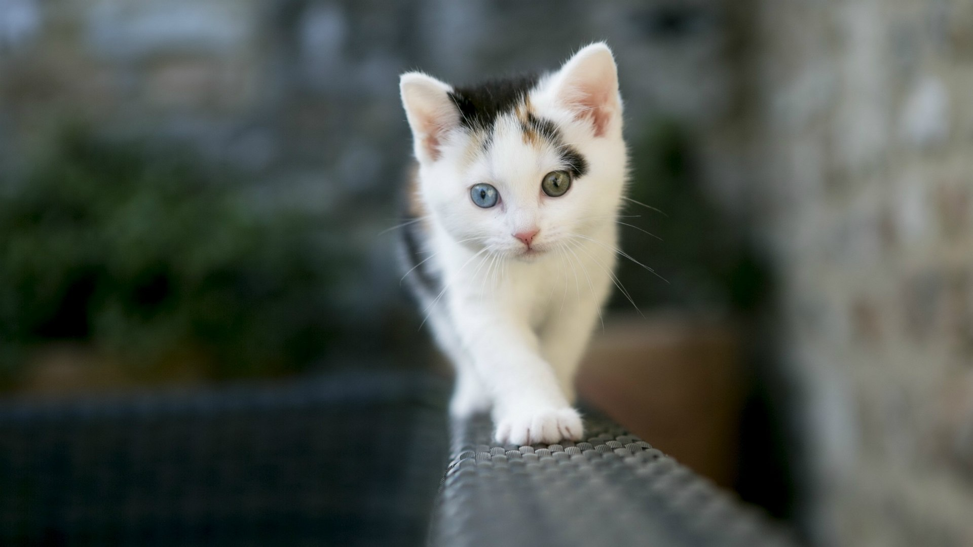 Cute White Cat HD Animals 4k Wallpapers Images Backgrounds