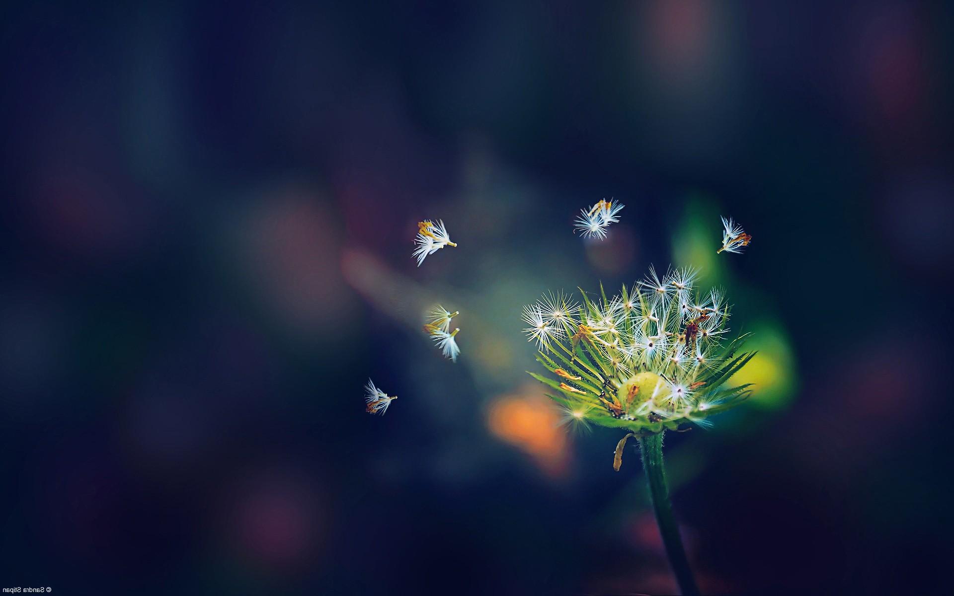 High Resolution 1080p Flower Wallpaper Hd Gambar Bunga