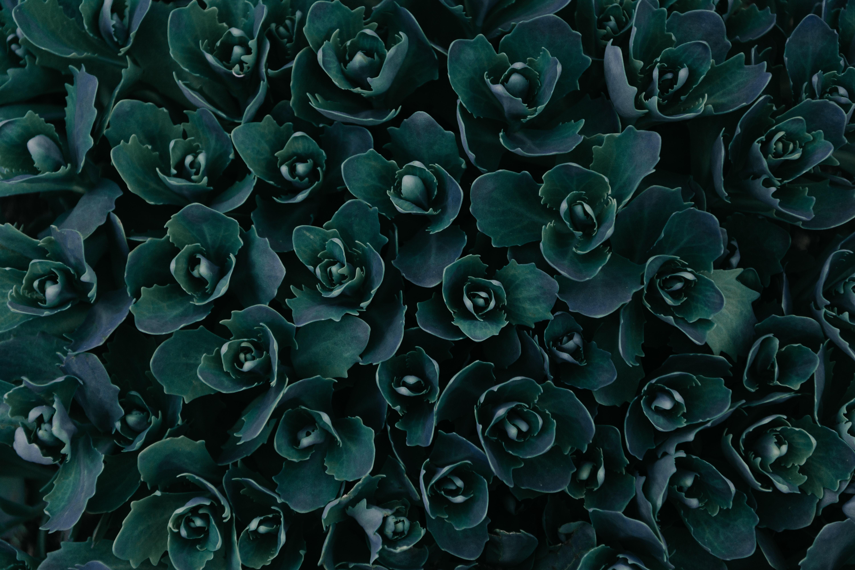 Dark Green Plants Abstract 5k, HD Nature, 4k Wallpapers