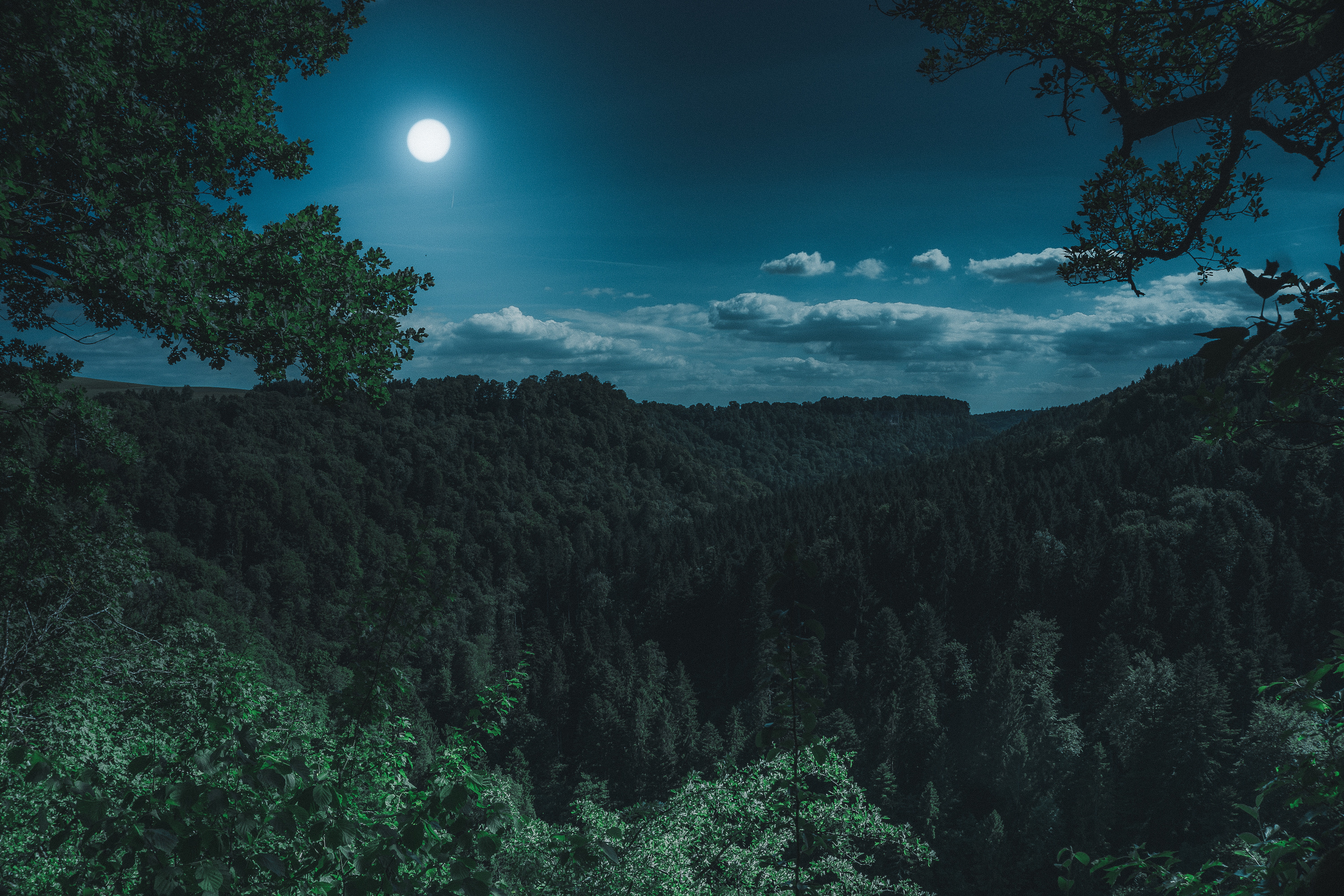 Dark Night Forest View 5k, HD Nature, 4k Wallpapers ...