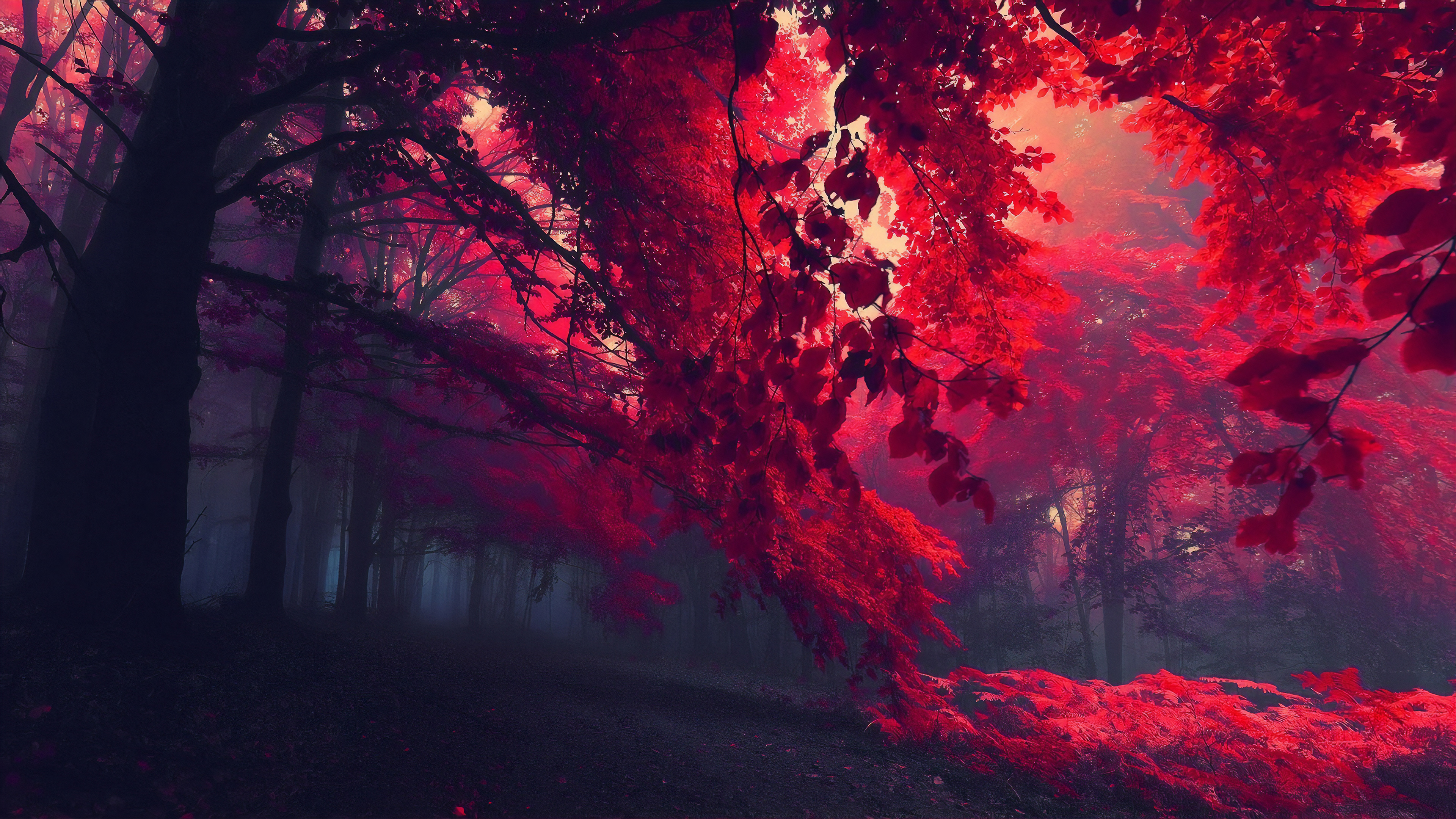 Dark Red Autumn Forest Hd Nature 4k Wallpapers Images