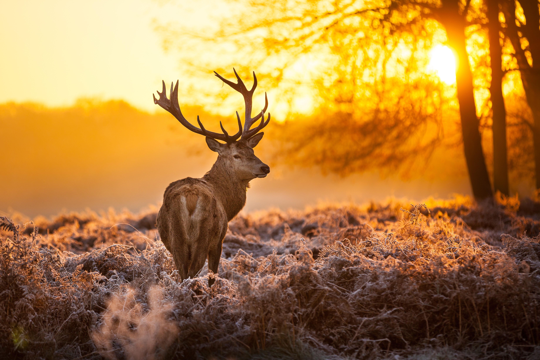 Mississippi Chapter Opposes Hunting of Deer Over Bait ... |Wide Deer Wildlife