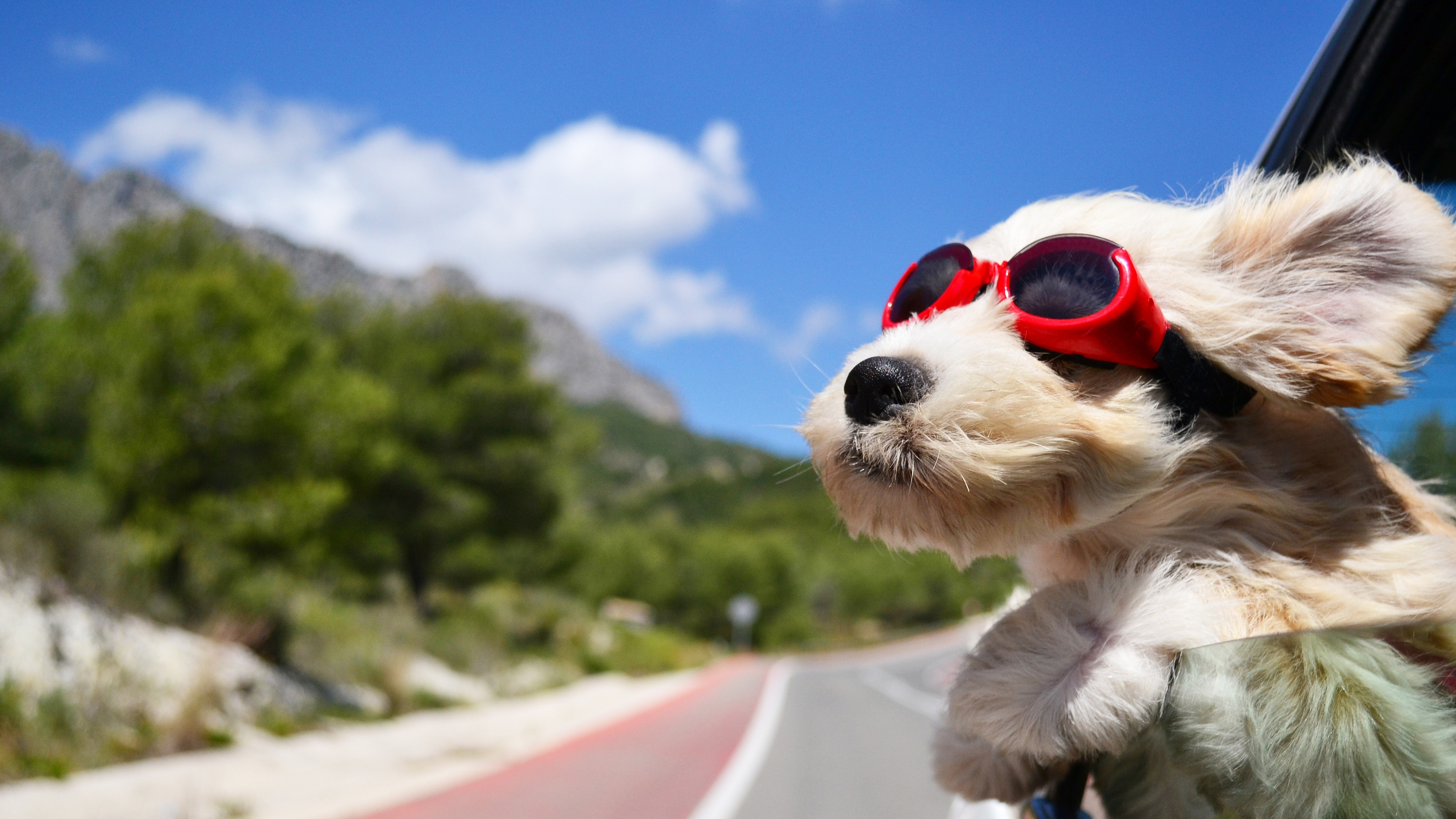Dog With Glasses Hd Animals 4k Wallpapers Images
