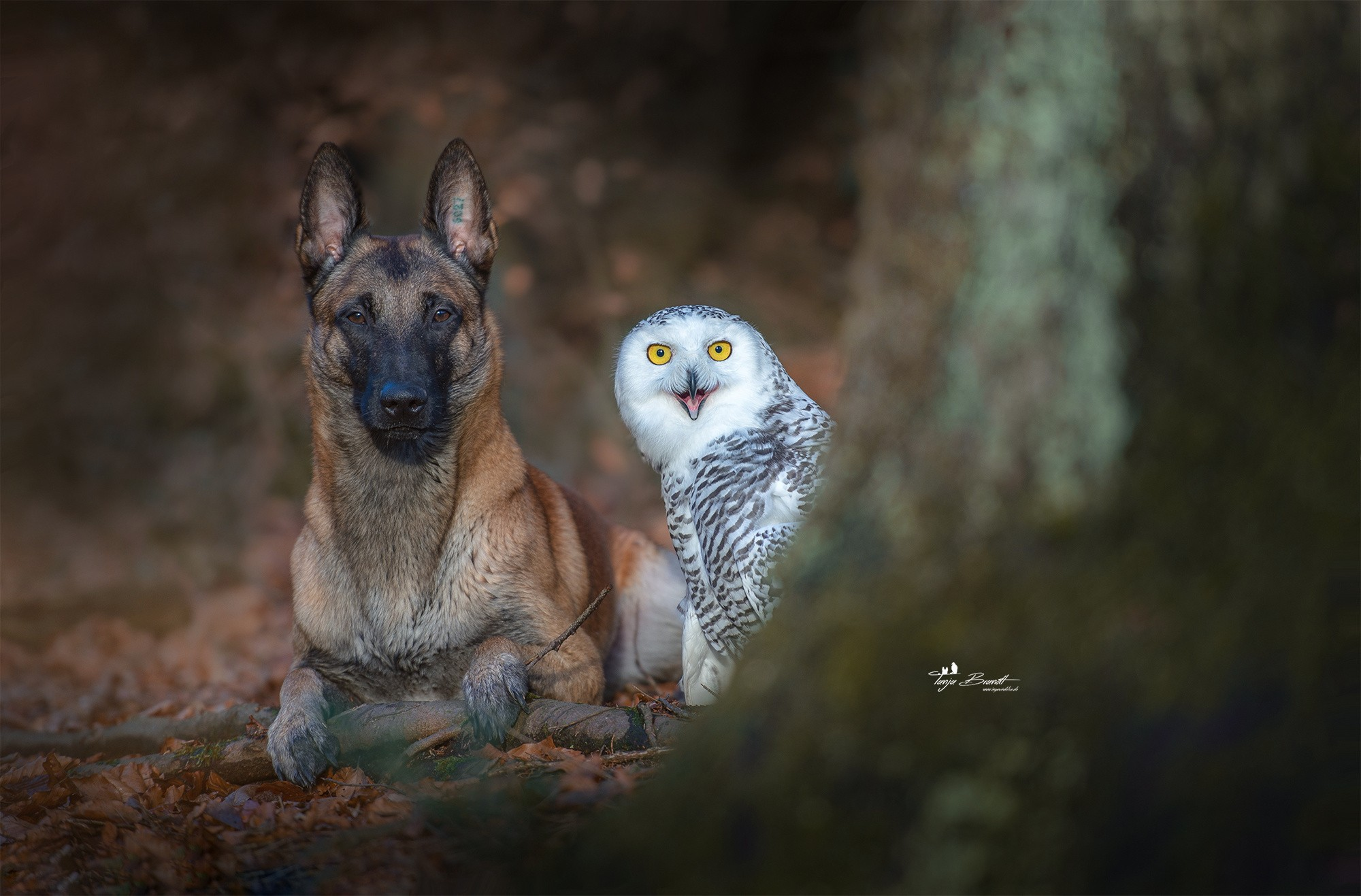 Dog With Owl 720P