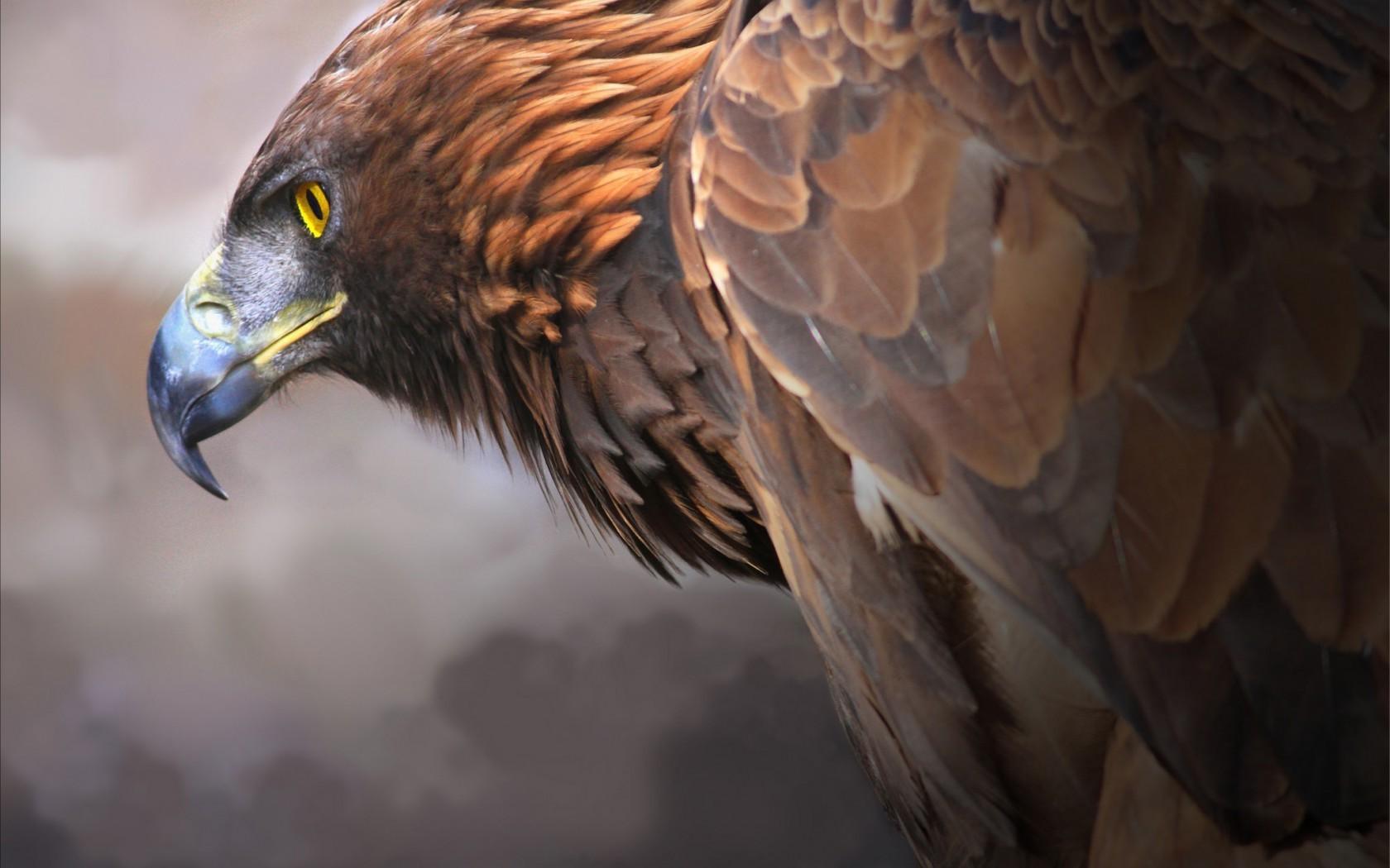 Eagle Digital Art 2