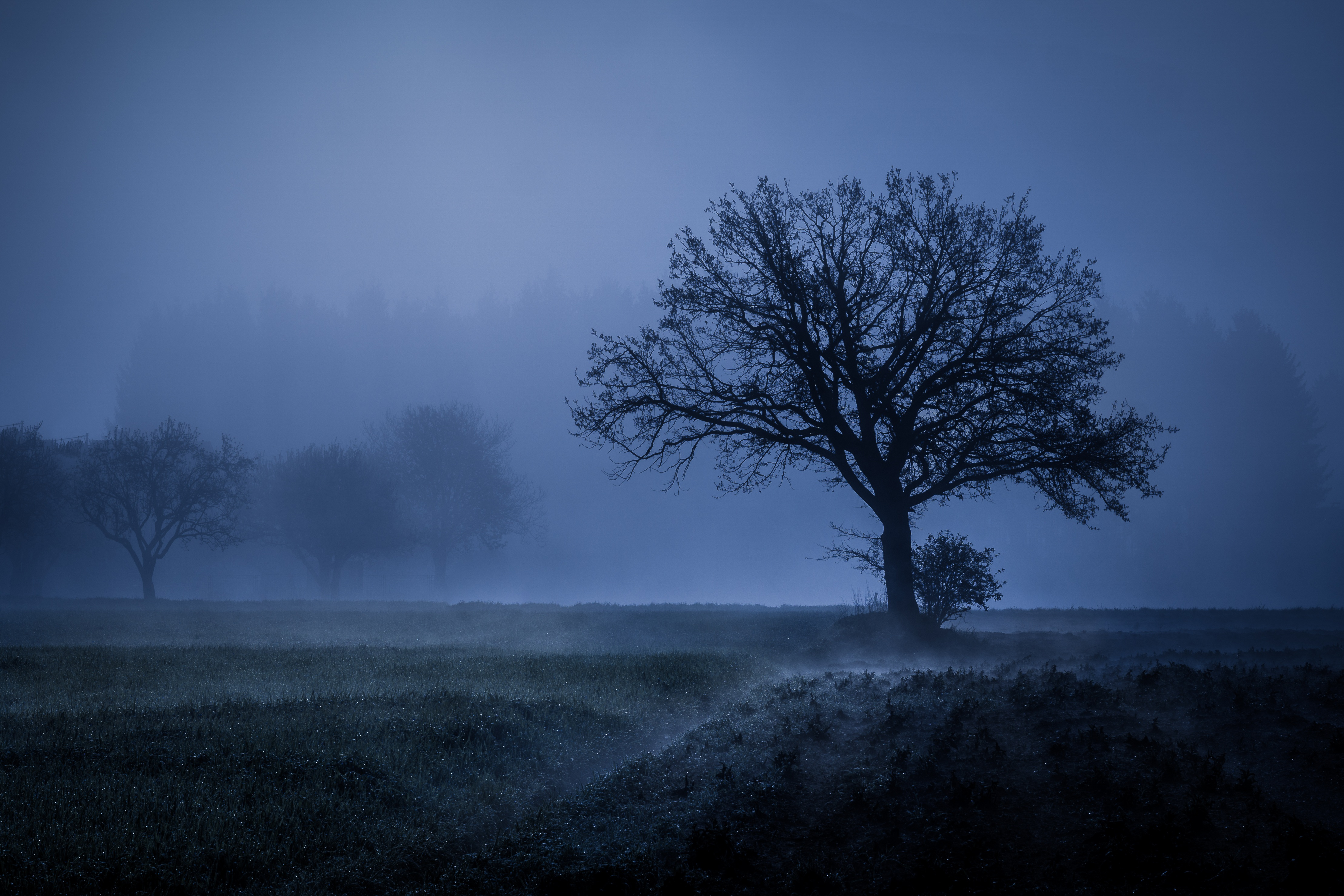 1366x768 Field Fog Trees Blue Weather Cold 4k 5k 1366x768