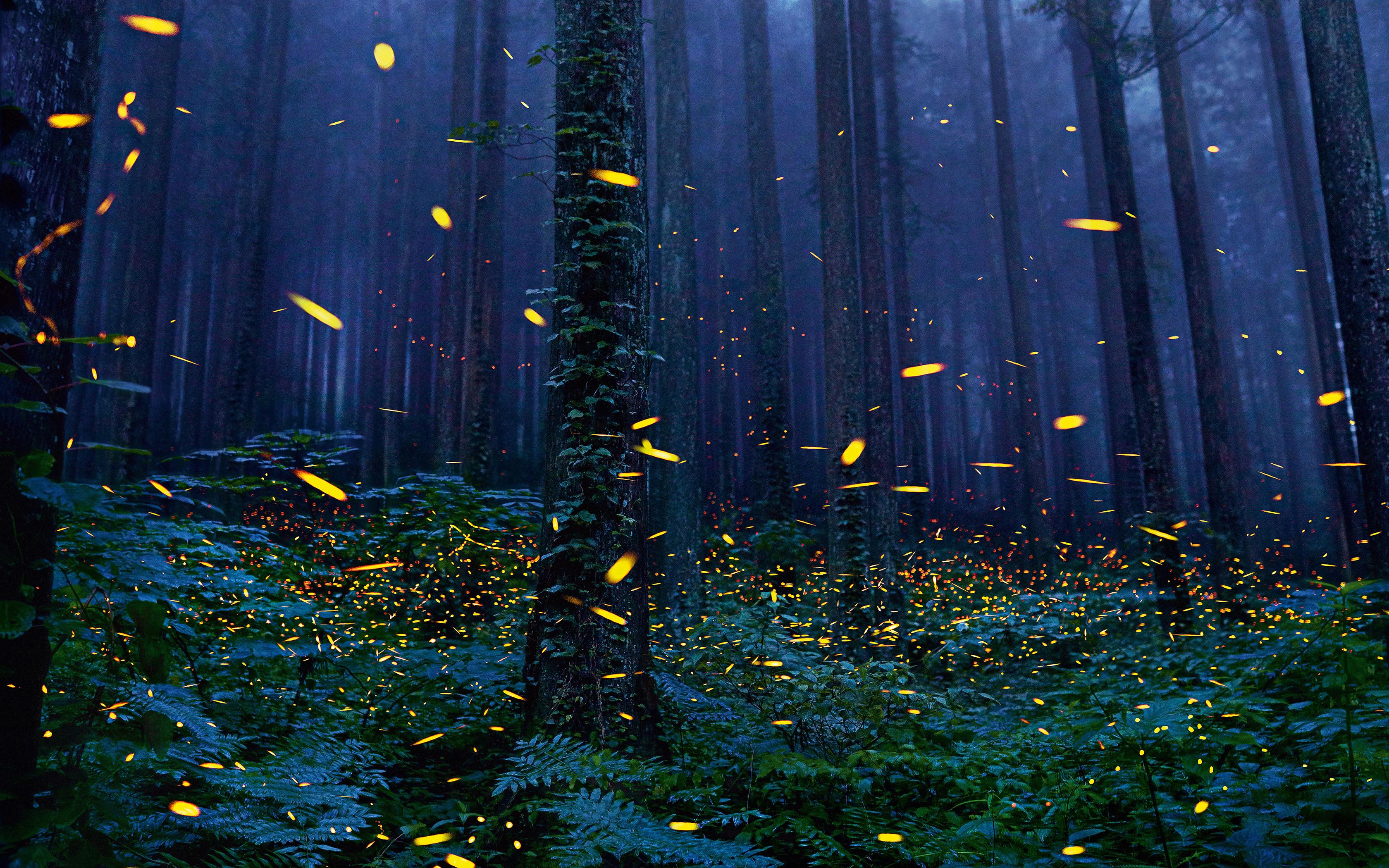1125x2436 Fireflies Forest 4k Iphone X,Iphone 10 HD 4k Wallpapers ... for Fireflies Wallpaper Iphone  570bof