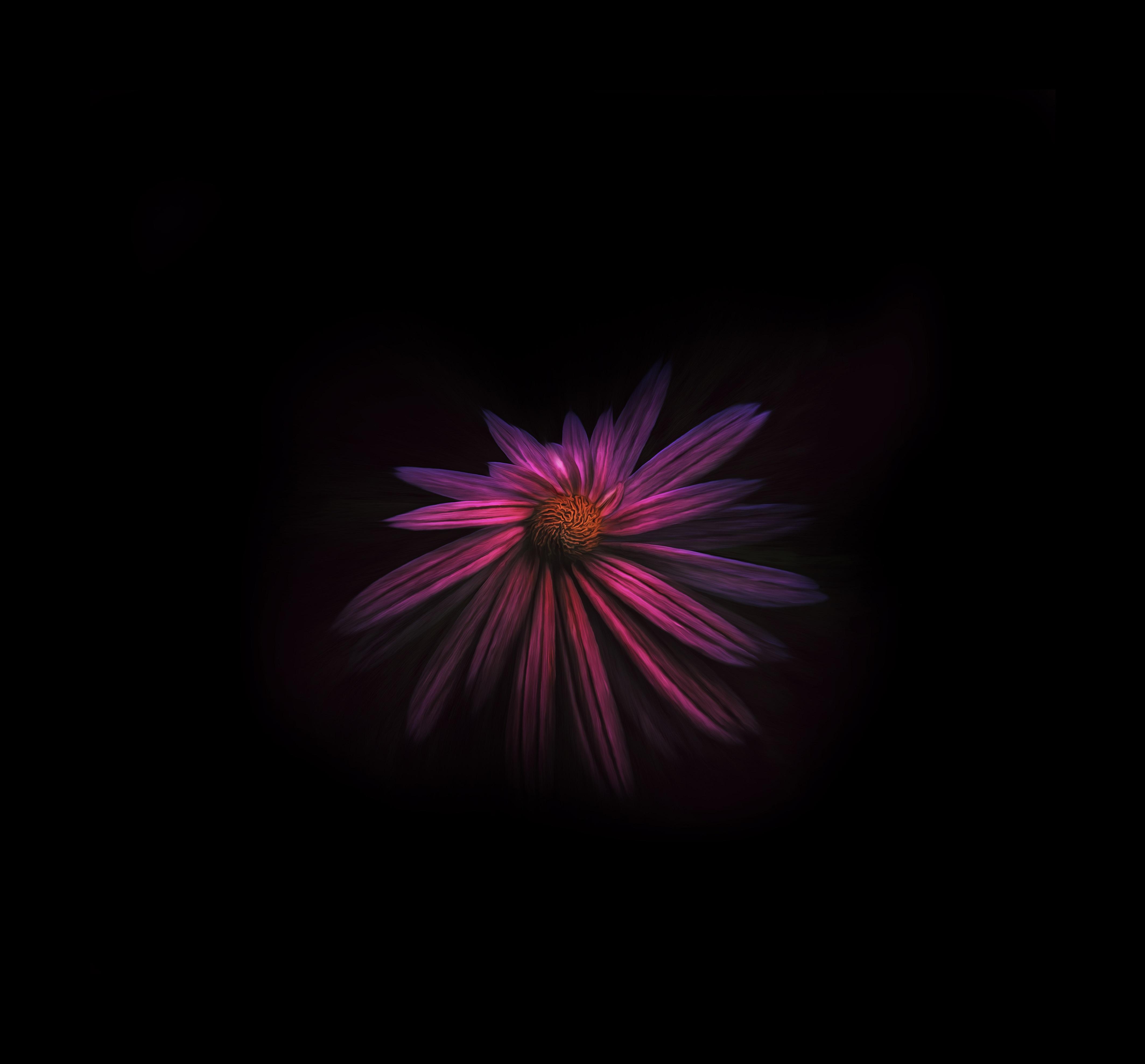 Flower Dark Background 4k, HD Flowers, 4k Wallpapers