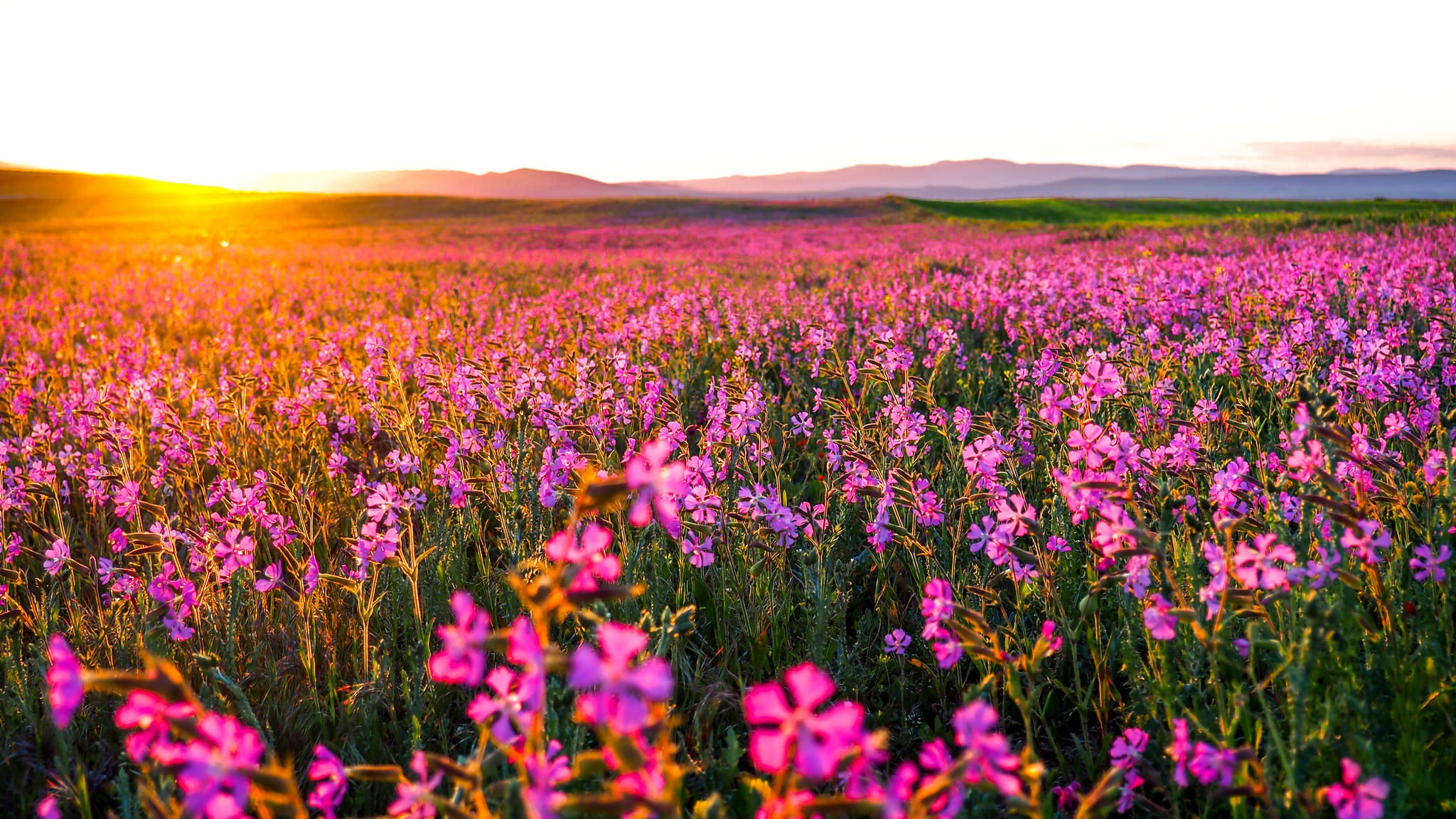 Flowers landscape hd nature 4k wallpapers images for Flower landscape