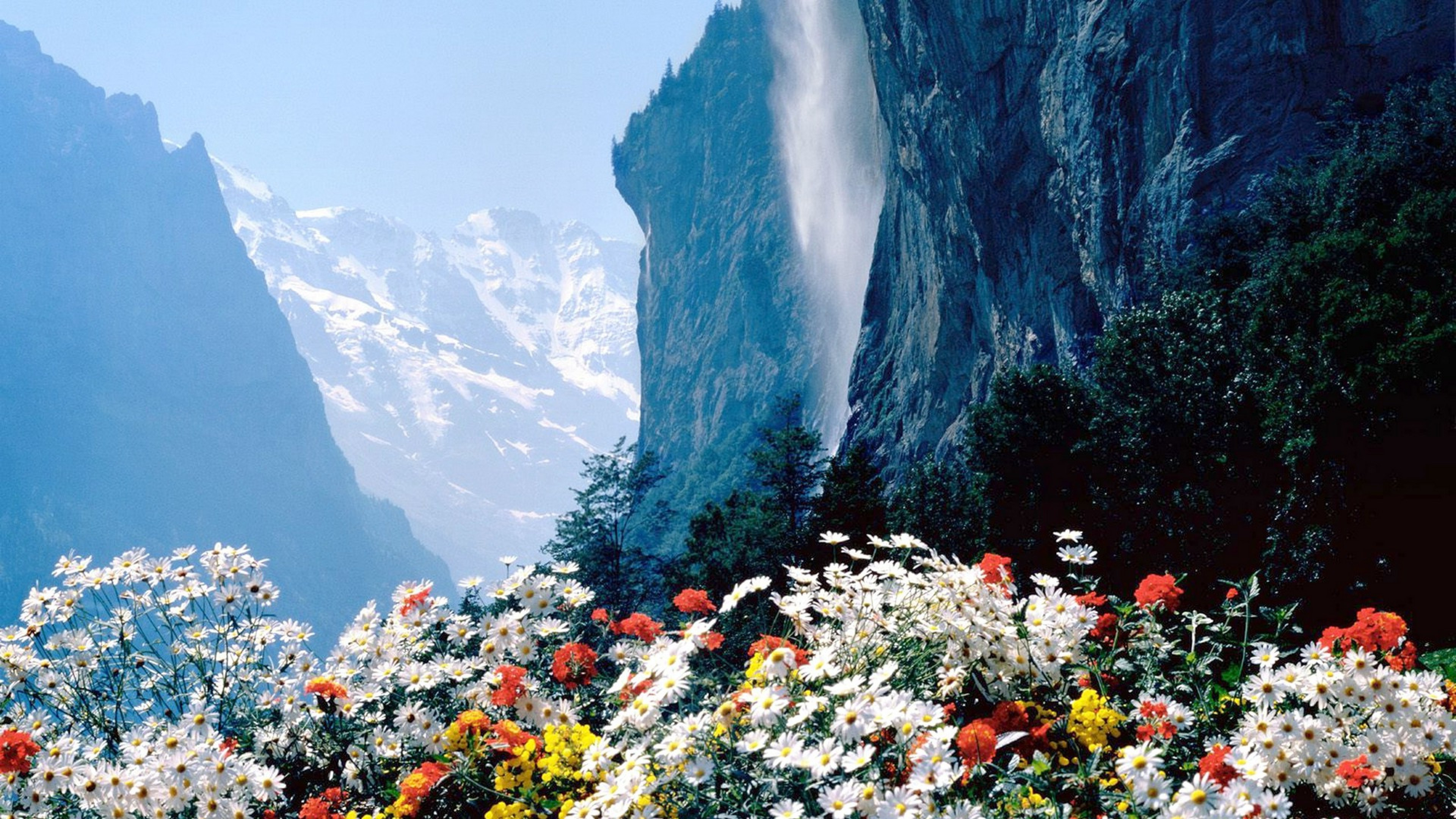 Flowers Mountains Cliff