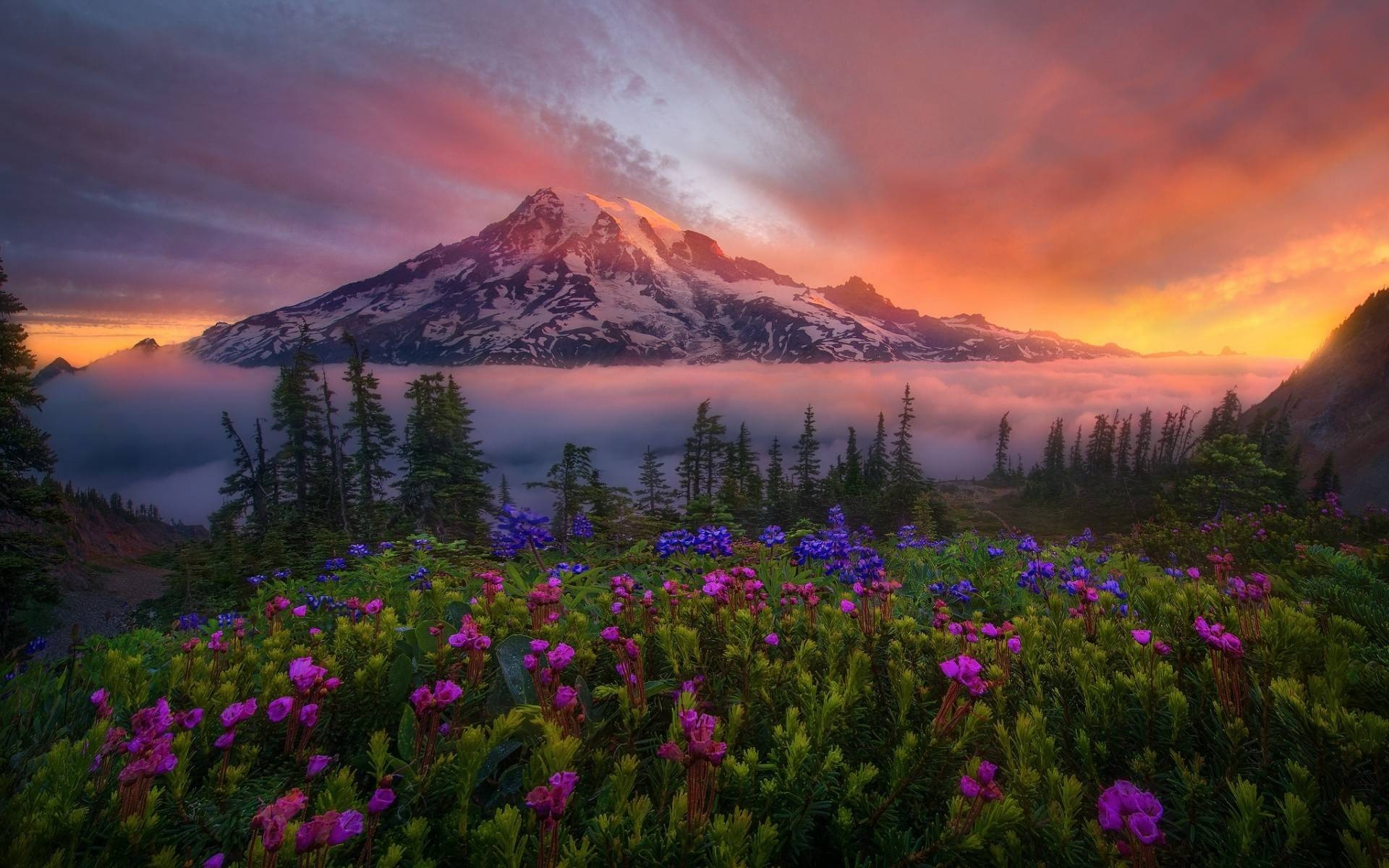Flowers Mountains (Laptop Full HD 1080P)