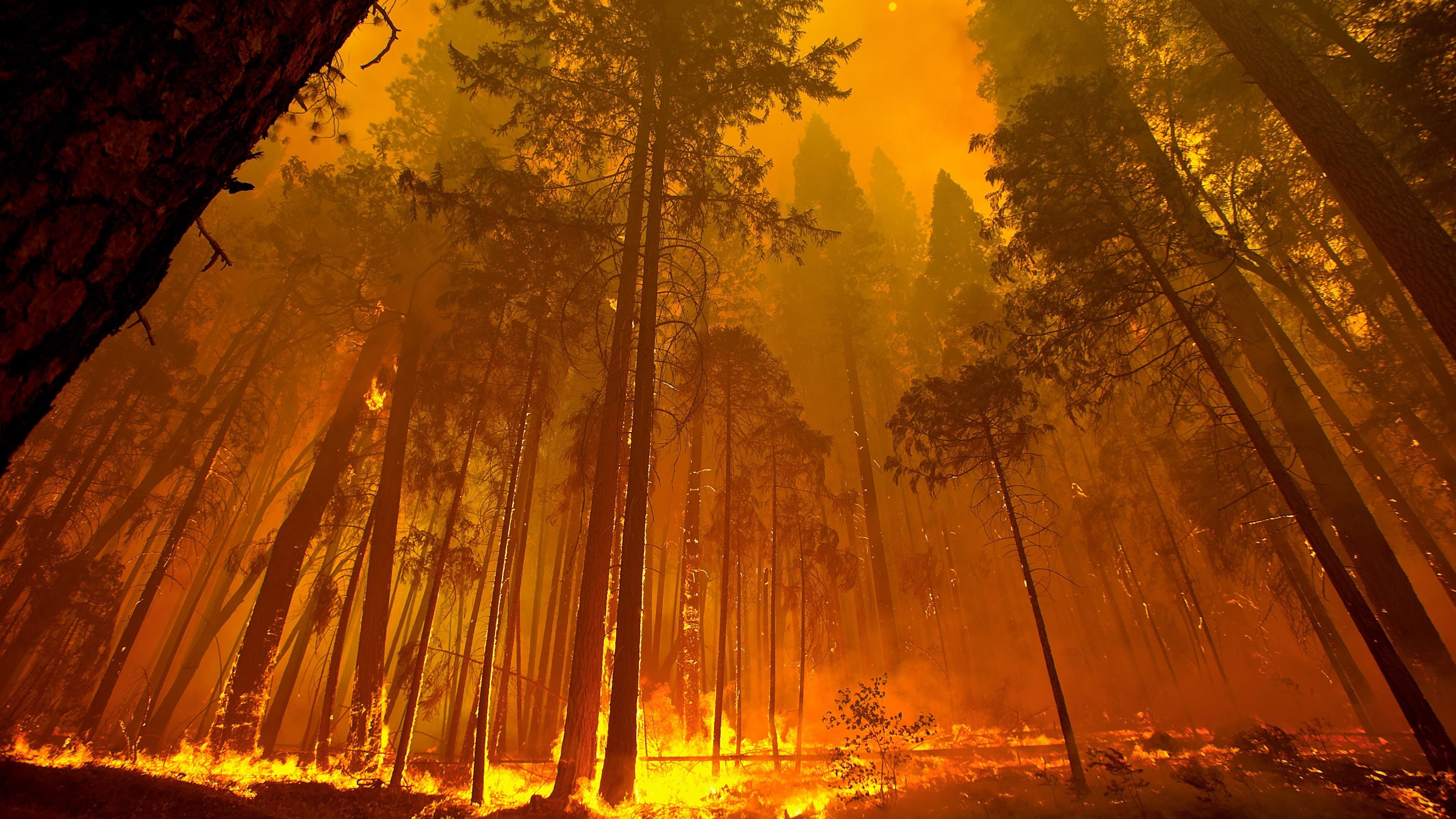 Forest Fire 4k Hd Nature 4k Wallpapers Images