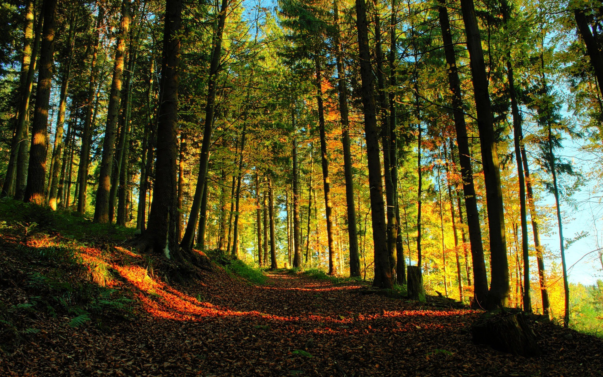 3840x2400 Forest Path 4k HD 4k Wallpapers, Images ...