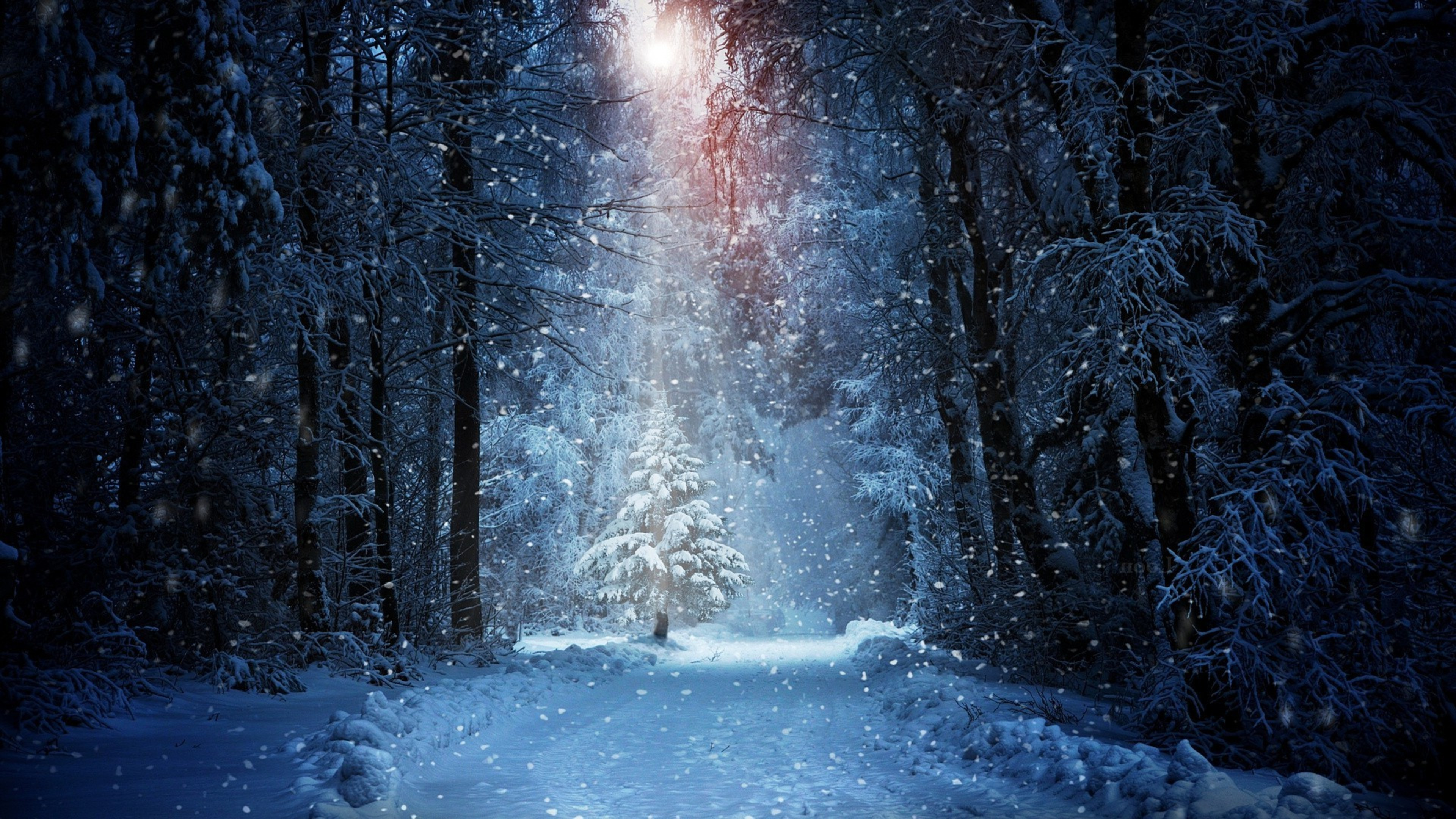 winter forest wallpaper related keywords suggestions