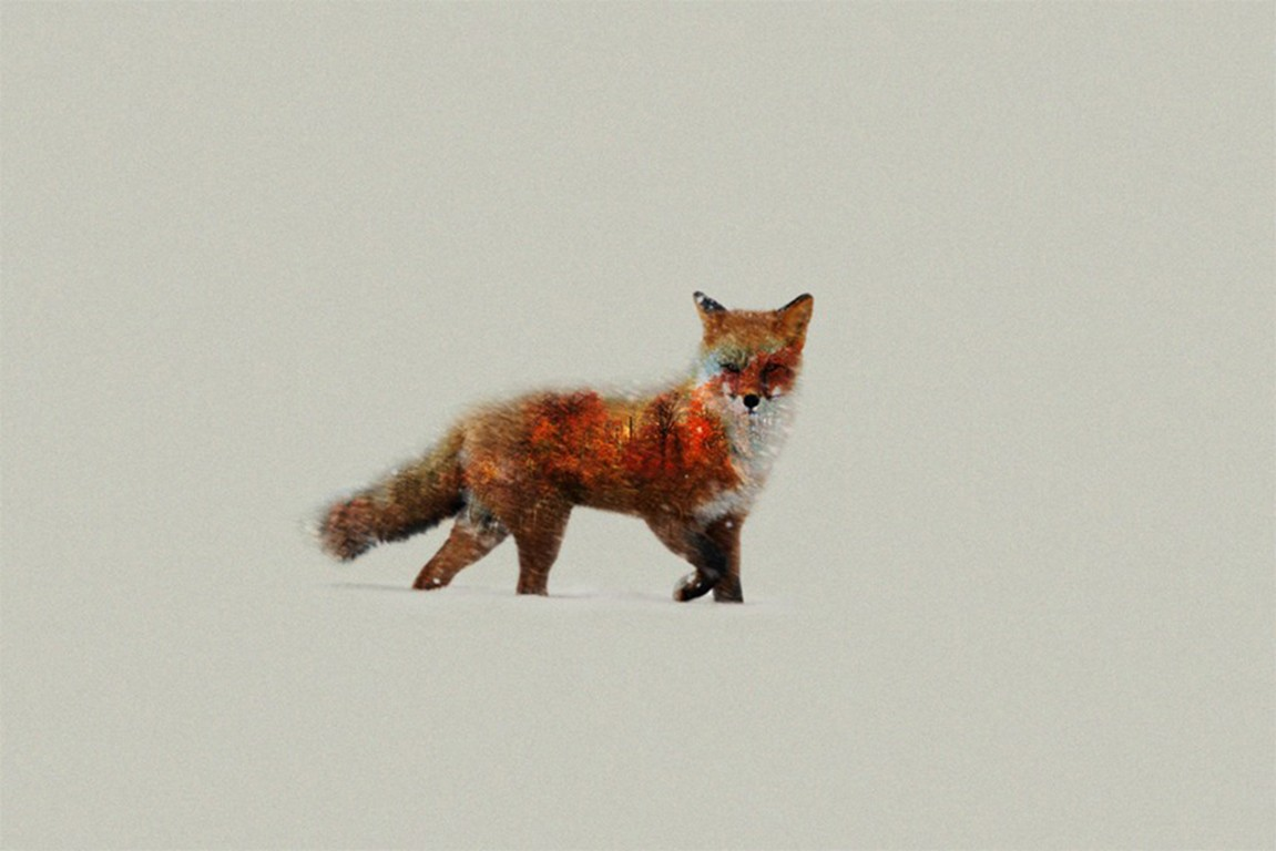 Fox Artist, HD Animals, 4k Wallpapers, Images, Backgrounds