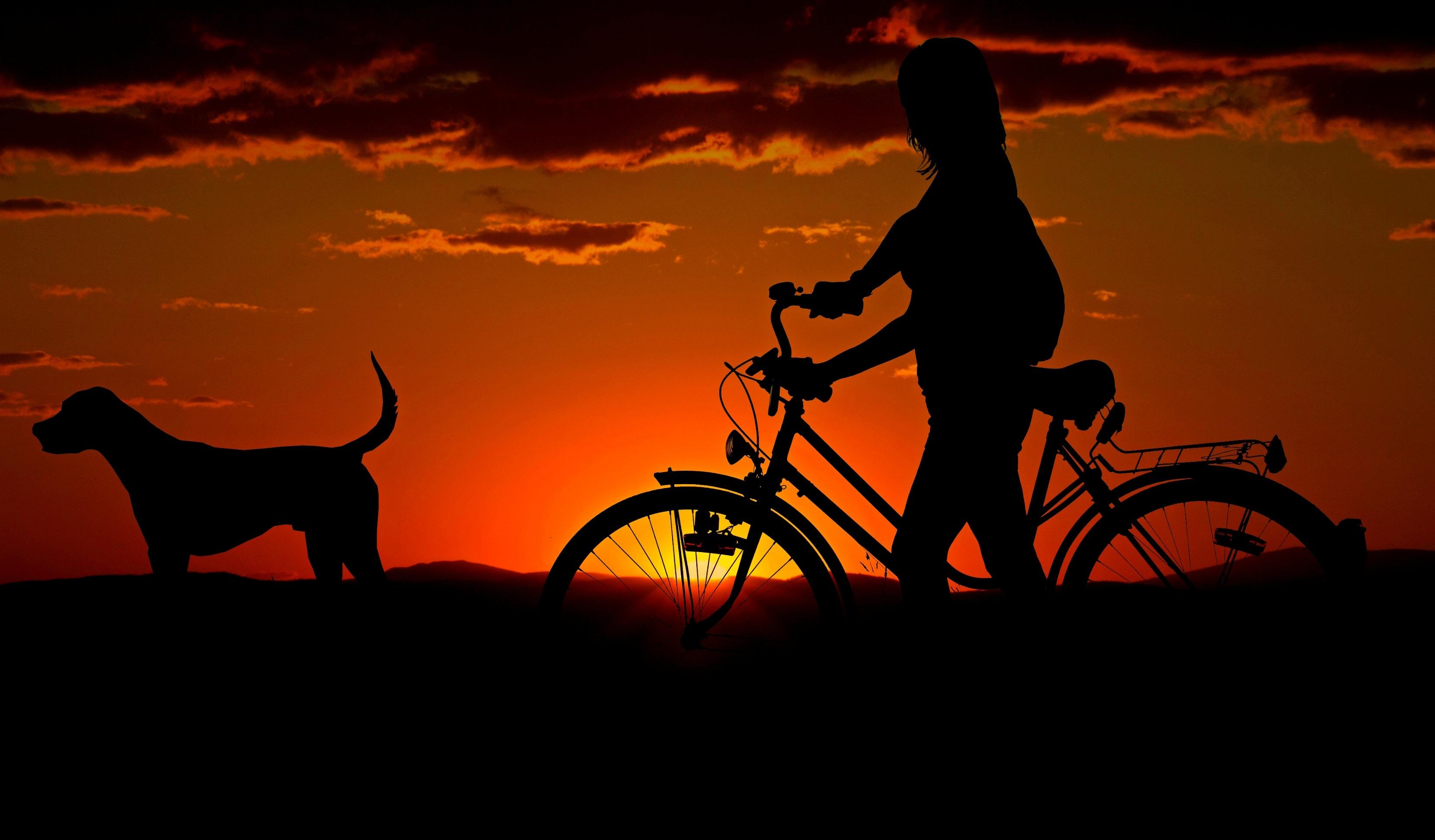 2048x2048 Anthem Ipad Air Hd 4k Wallpapers Images: 2048x2048 Girl Cycle Dog Morning Walk Ipad Air HD 4k