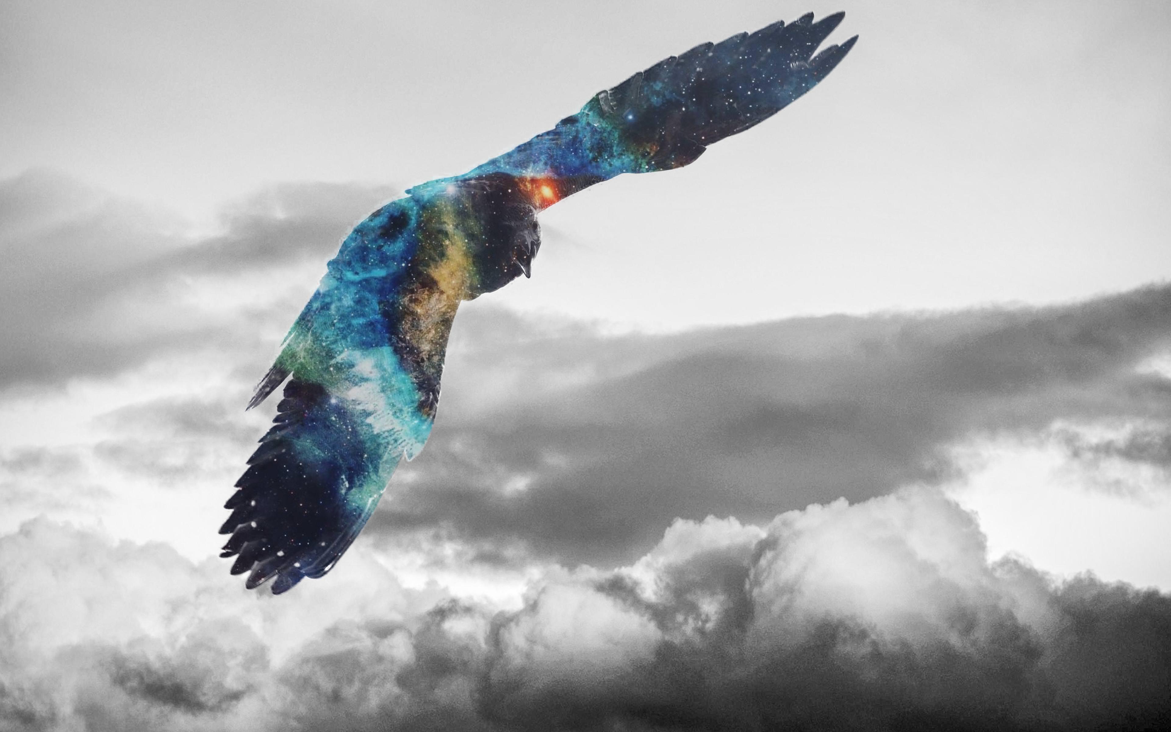 Golden Eagle Flying