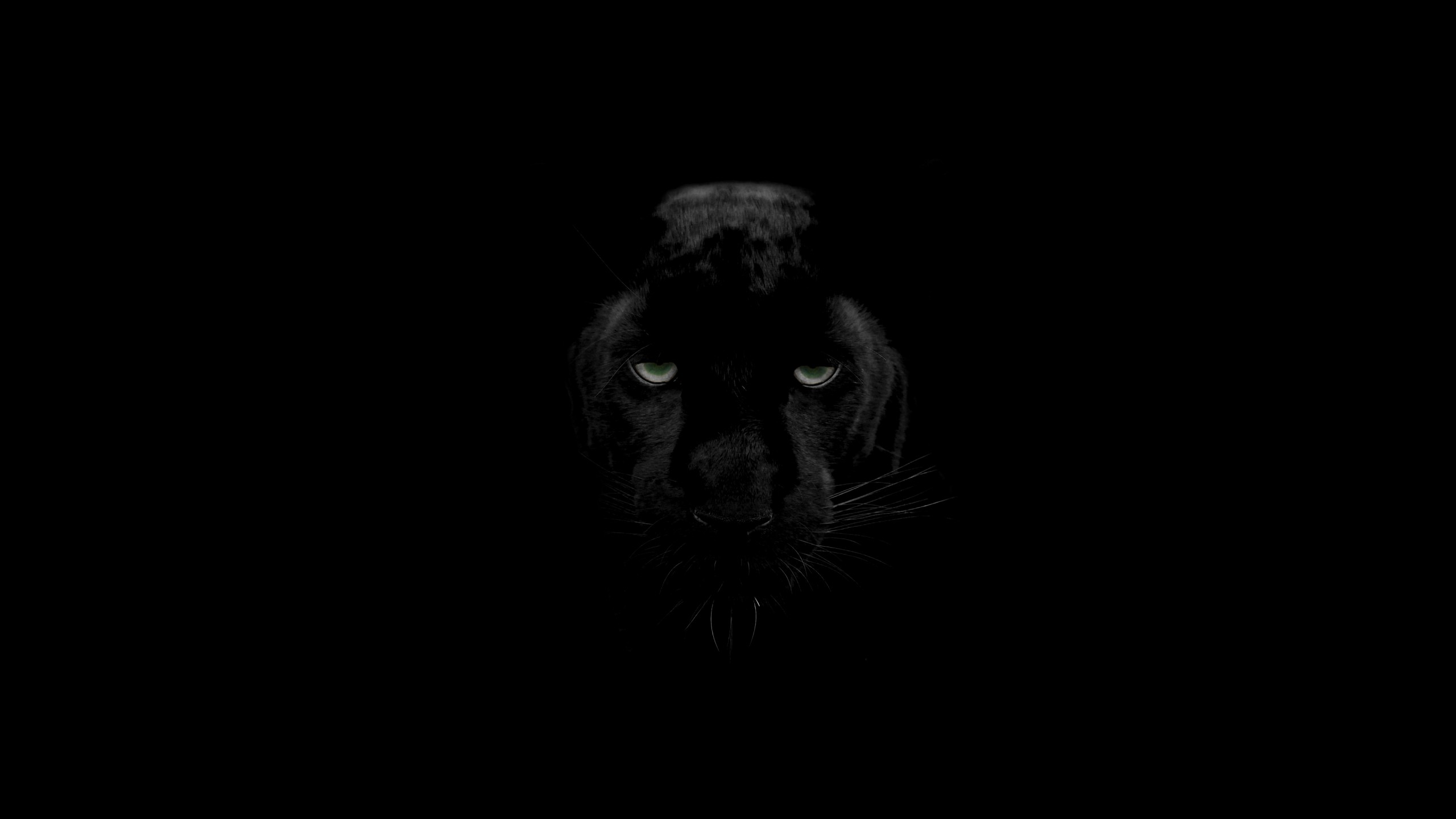 Green Eyes Black Panther Hd Animals 4k Wallpapers Images