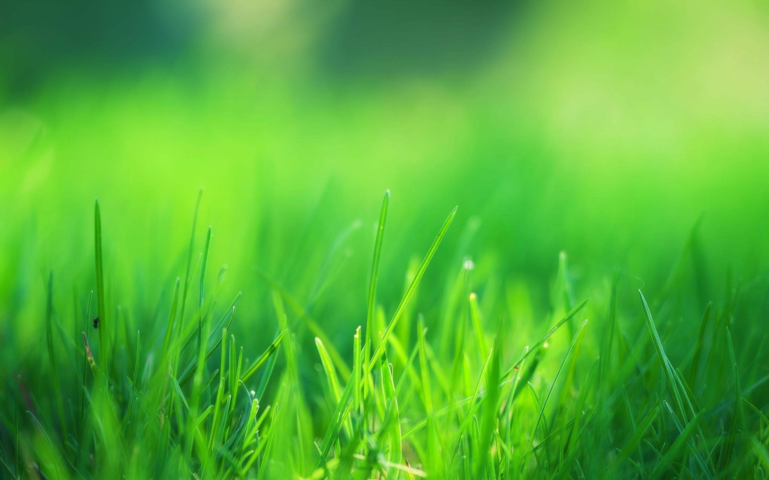 Great Wallpaper High Resolution Green - green-grass-field  Best Photo Reference_68148.jpg