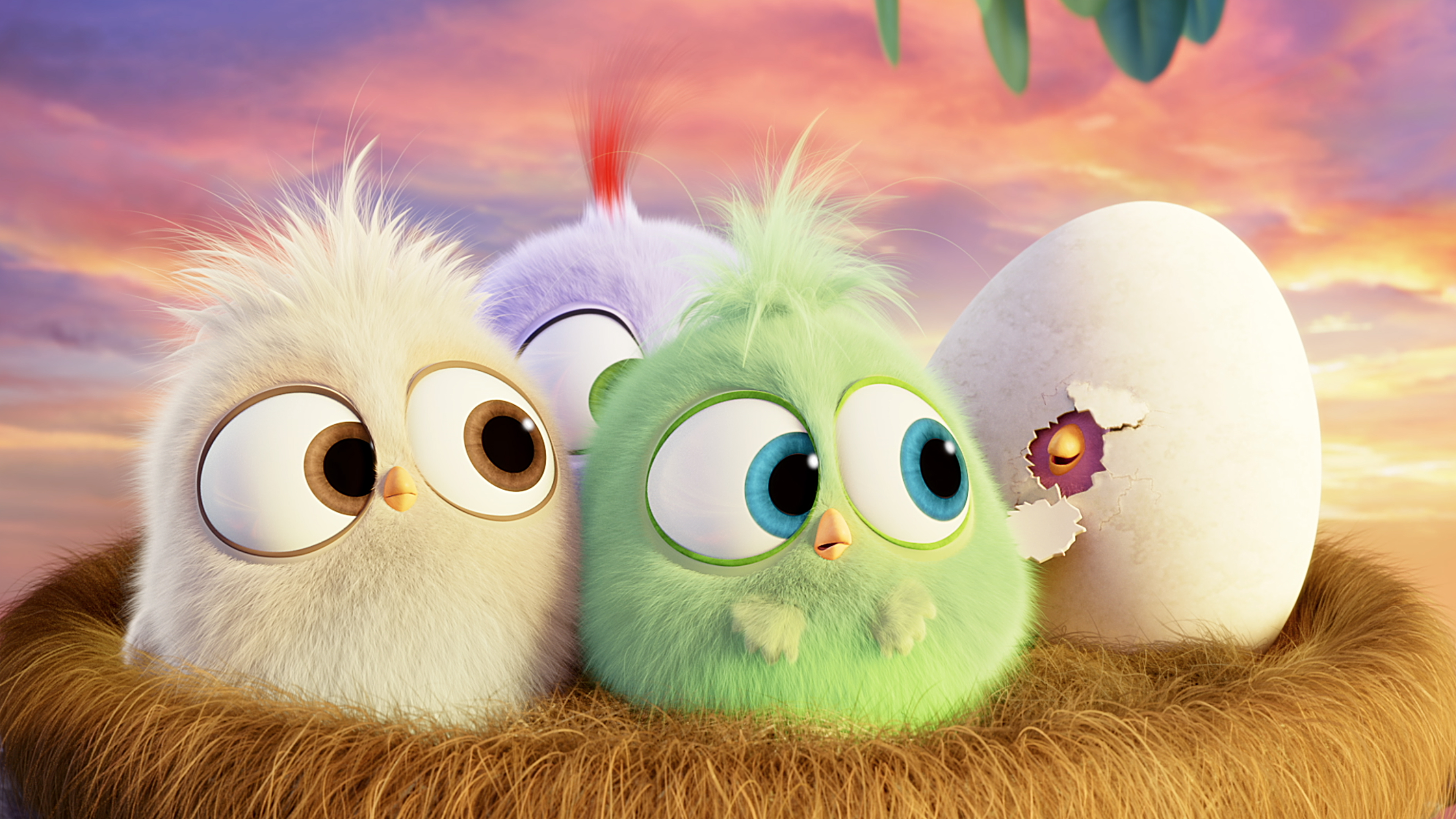 Hatchlings Angry Birds Wallpaper