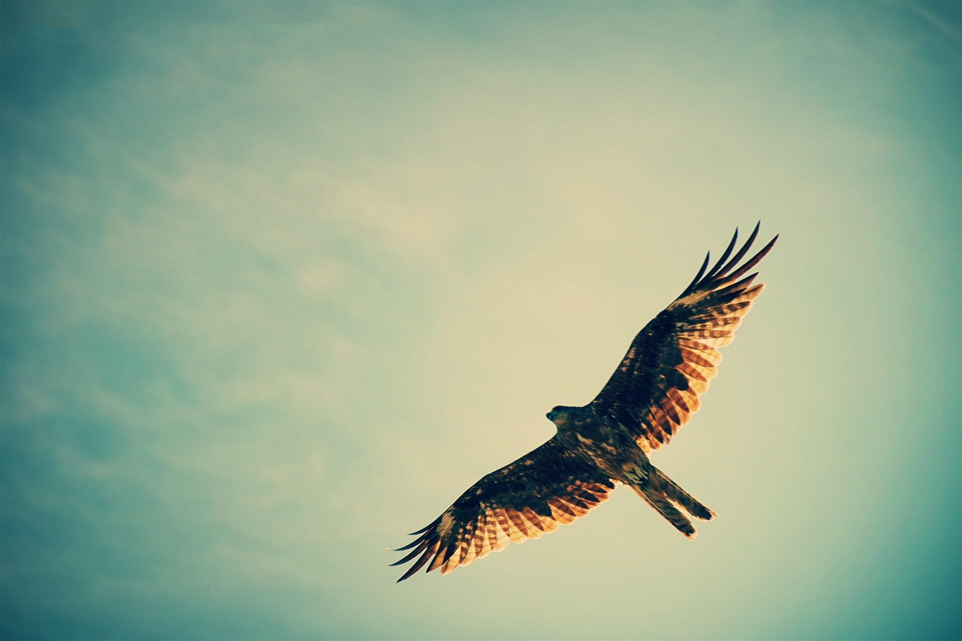 hawk hd wallpaper - photo #36