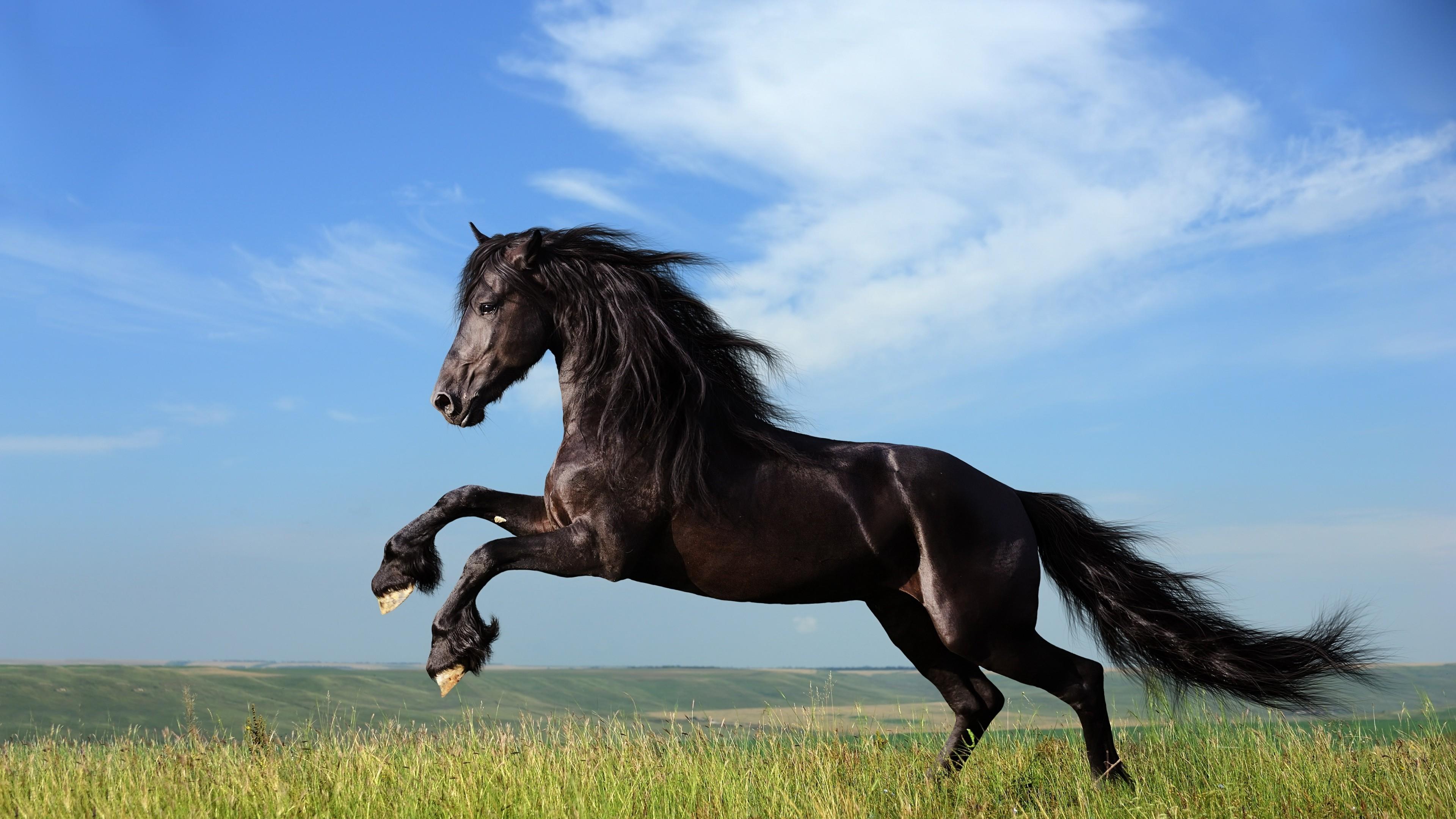 cheval wallpaper hd 1 - photo #46