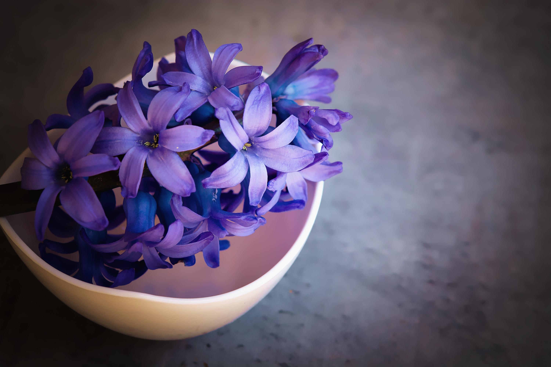 240x320 hyacinth flower violet flowers nokia 230 nokia 215 samsung published on november 9 2017 original resolution izmirmasajfo