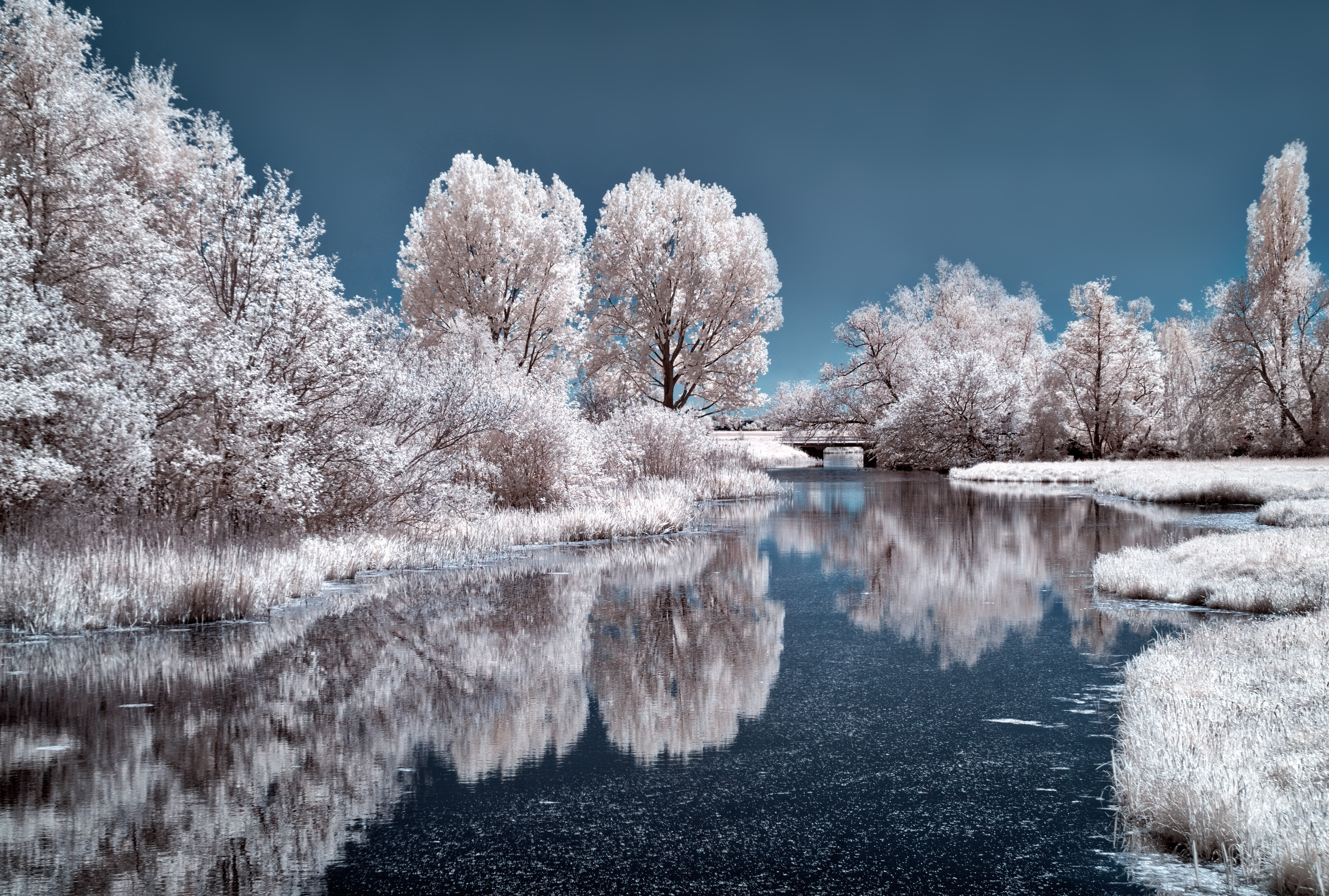 Ice Lake Frozen Trees 4k, HD Nature, 4k Wallpapers, Images ...