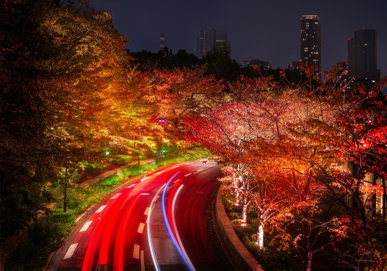 Japan Tokyo Roads Autumn Trees Night, HD Nature, 4k ...