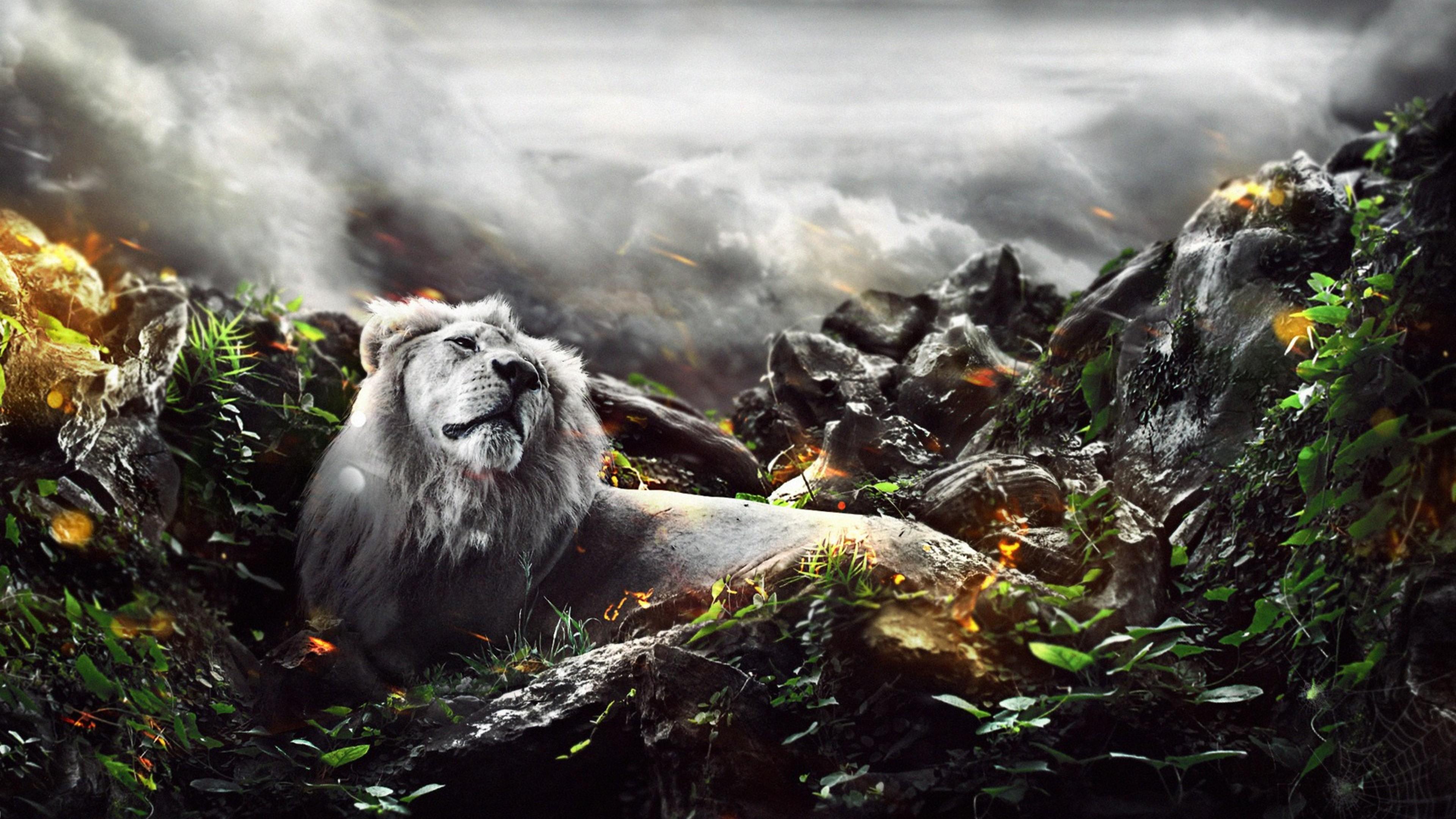 Jungle lion creative hd creative 4k wallpapers images - Lion 4k wallpaper for mobile ...