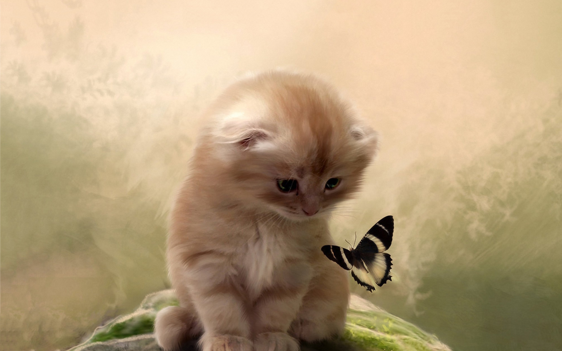 1360x768 Kitty Playing With Butterfly Laptop Hd Hd 4k Wallpapers