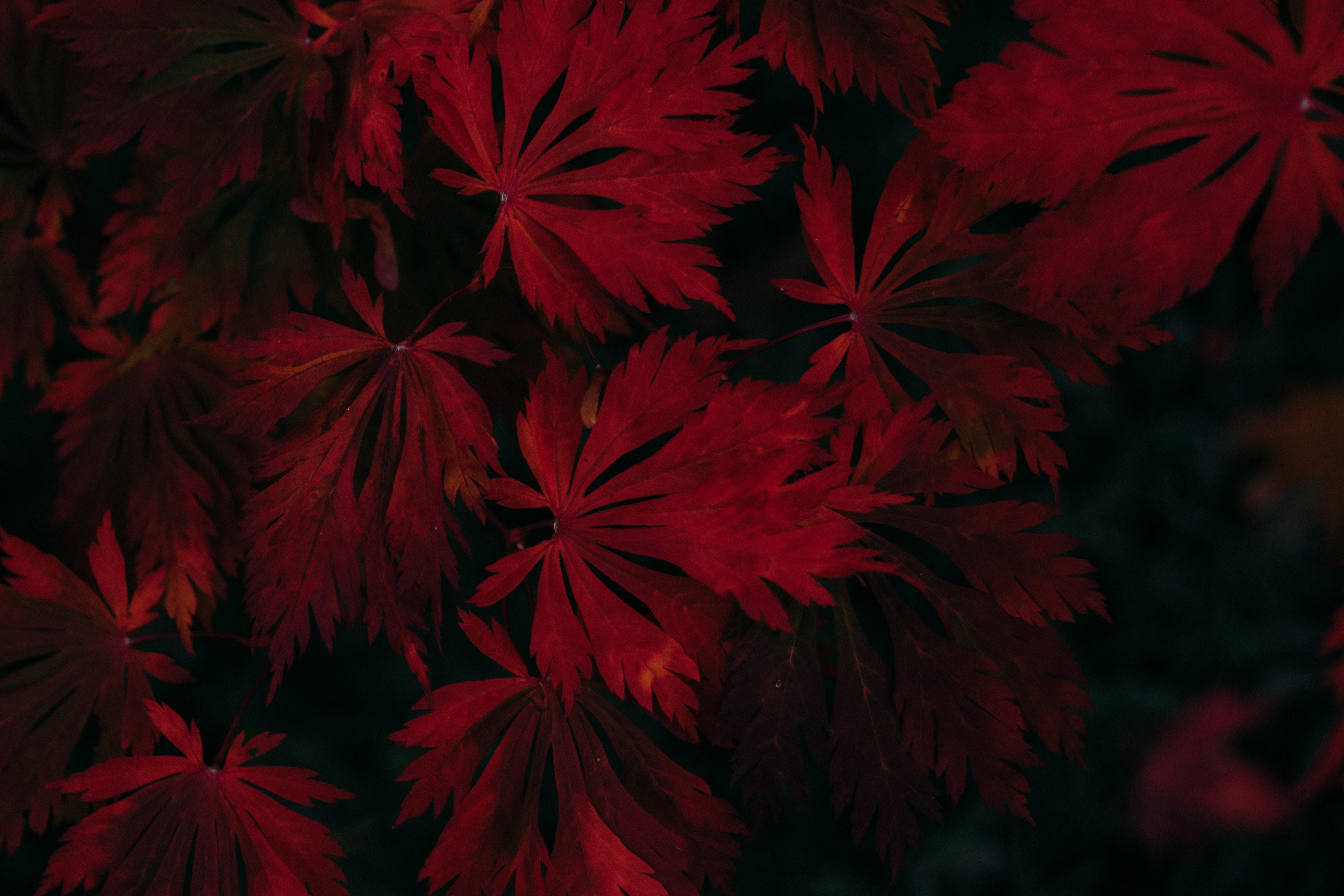 Leaf Dark Vignette Autumn Fall 4k Hd Photography 4k