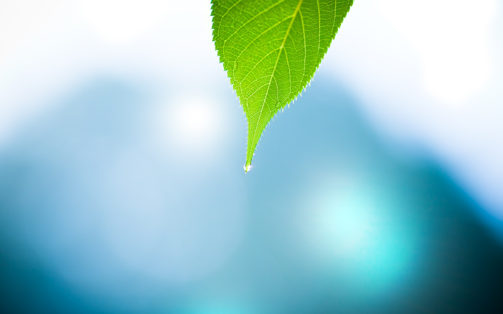 Leave macro hd nature 4k wallpapers images backgrounds for And pictures
