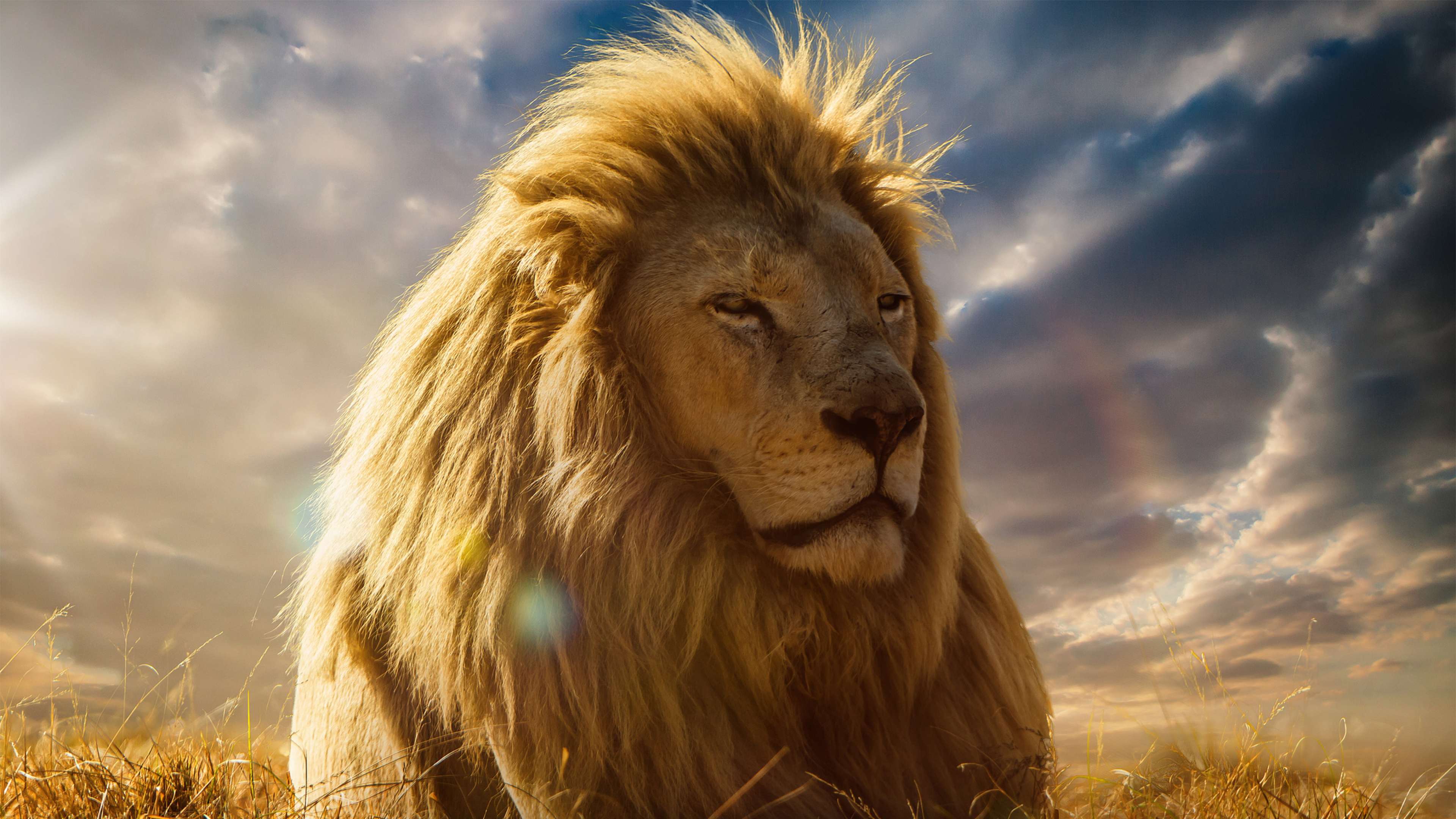 Most Inspiring Wallpaper Logo Lion - lion-king-4k-hd  Perfect Image Reference_366112.jpg