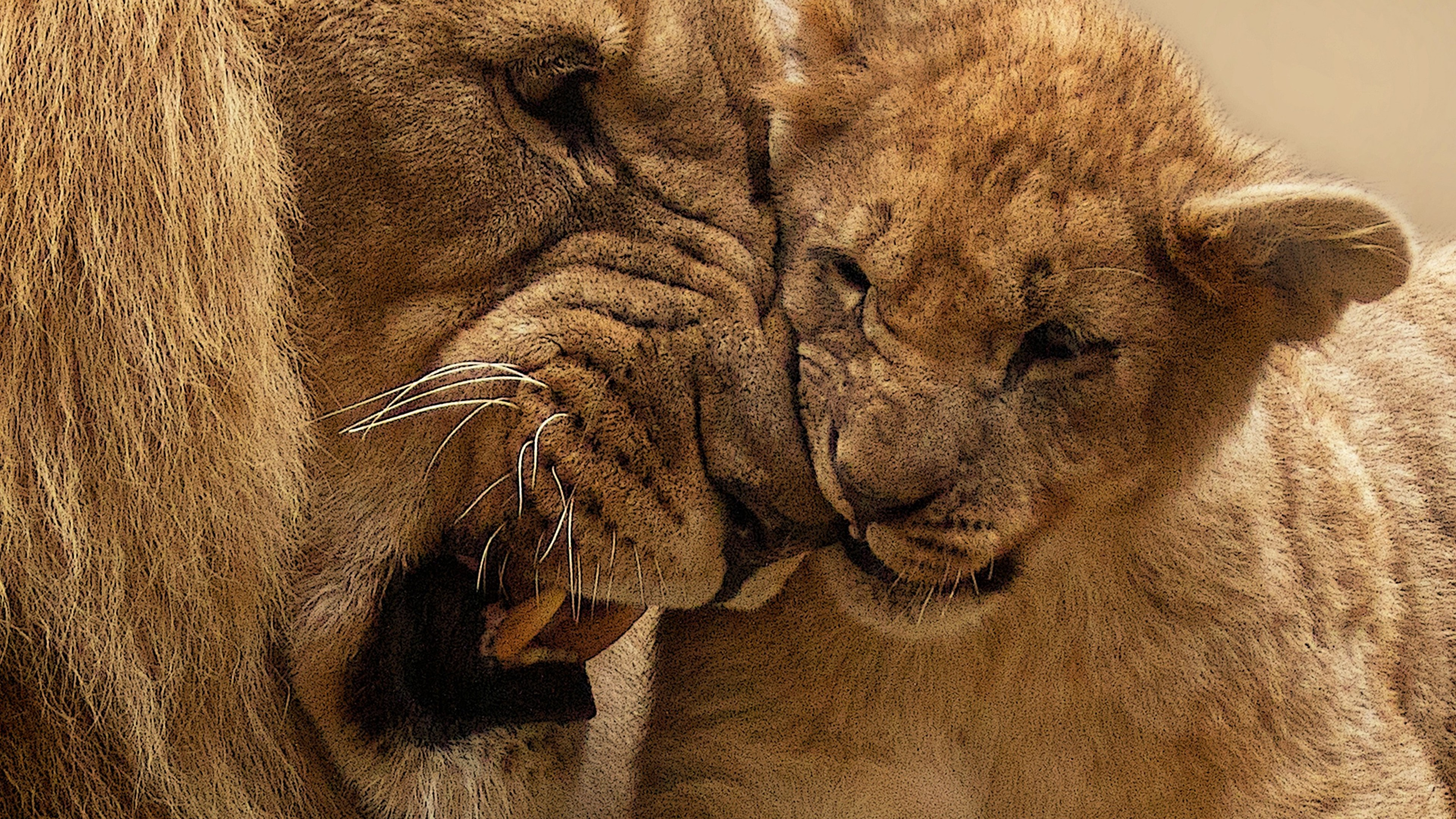 Lion mother cub hd animals 4k wallpapers images - Lion 4k wallpaper for mobile ...