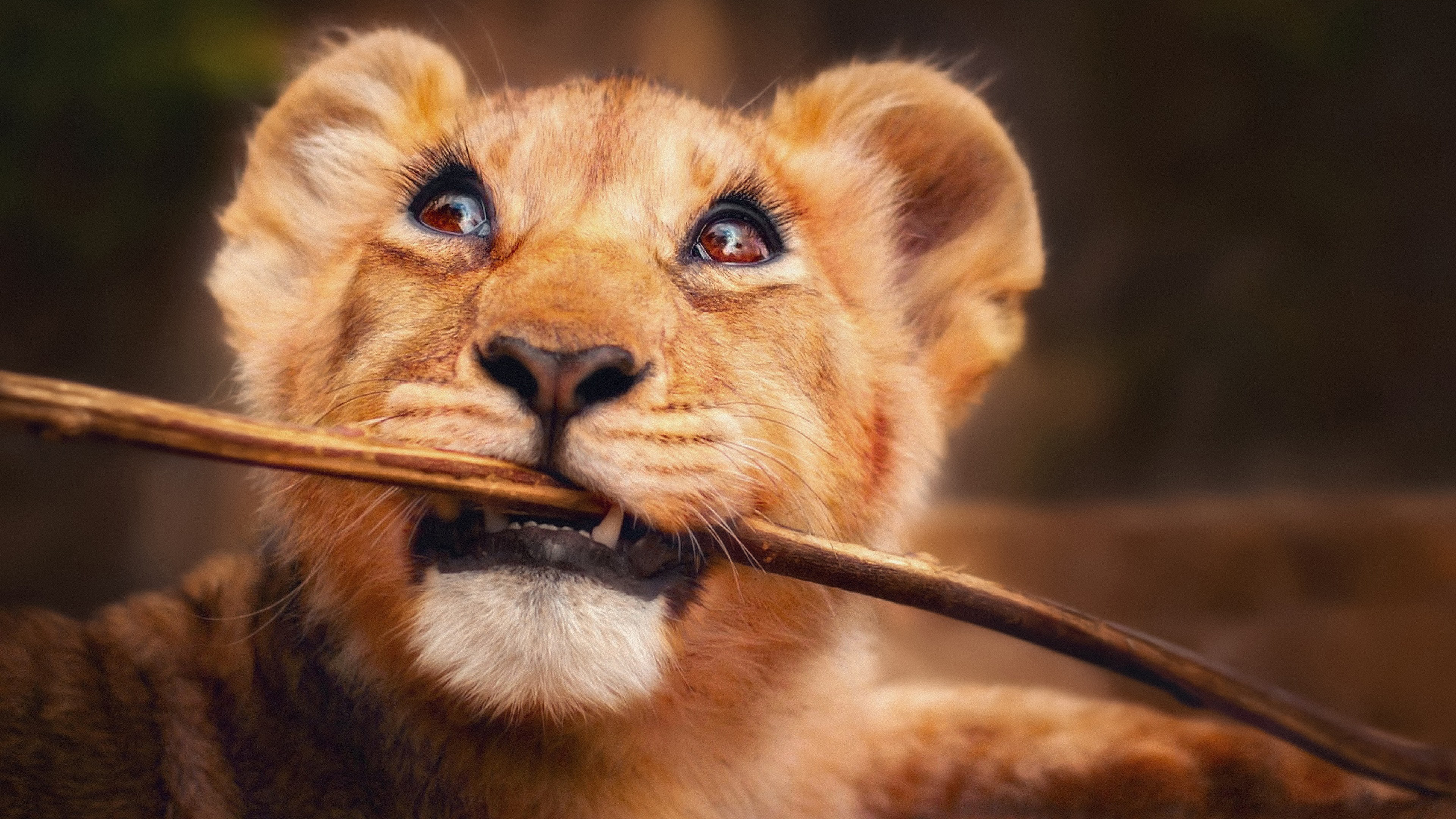 Lion With Stick In Mouth 4k, HD Animals, 4k Wallpapers ...