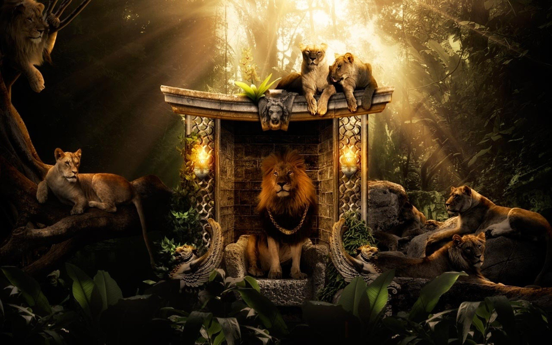 lions jungle  hd creative  4k wallpapers  images  backgrounds  photos and pictures