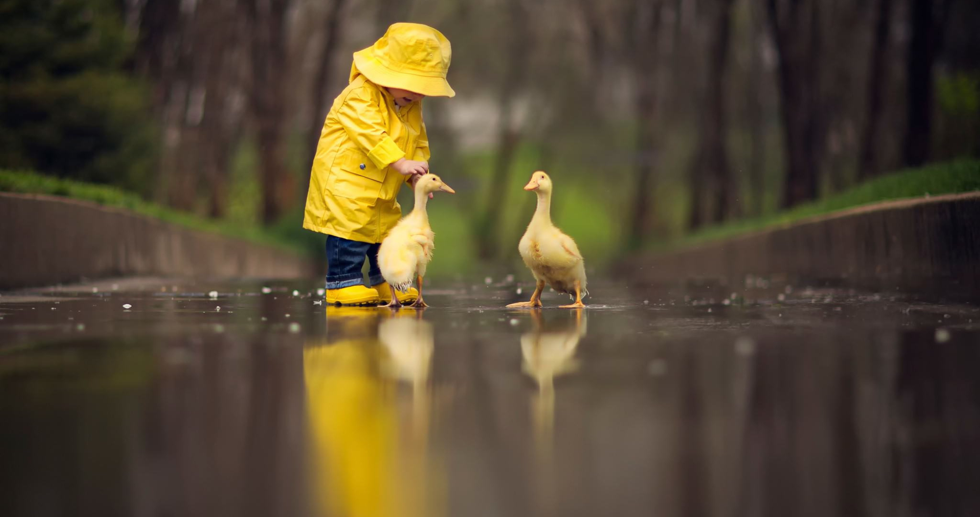 Little Boy Child Playing With Ducks, HD Cute, 4k Wallpapers, Images ...